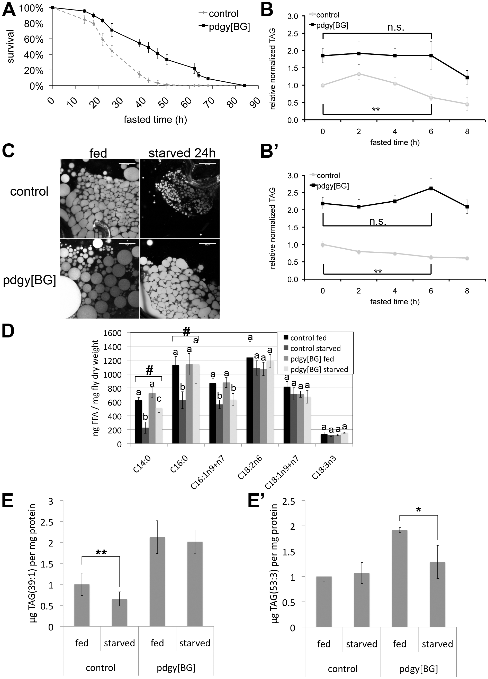 <i>pudgy</i> mutants have an altered lipid catabolic profile upon fasting.