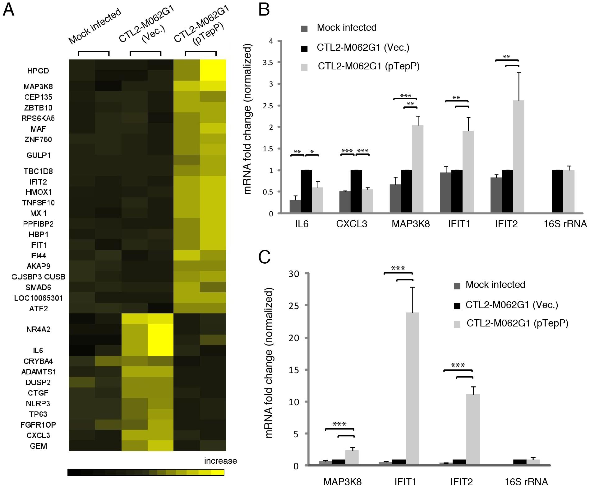 Global transcriptional profiling links TepP function to immune-related responses.