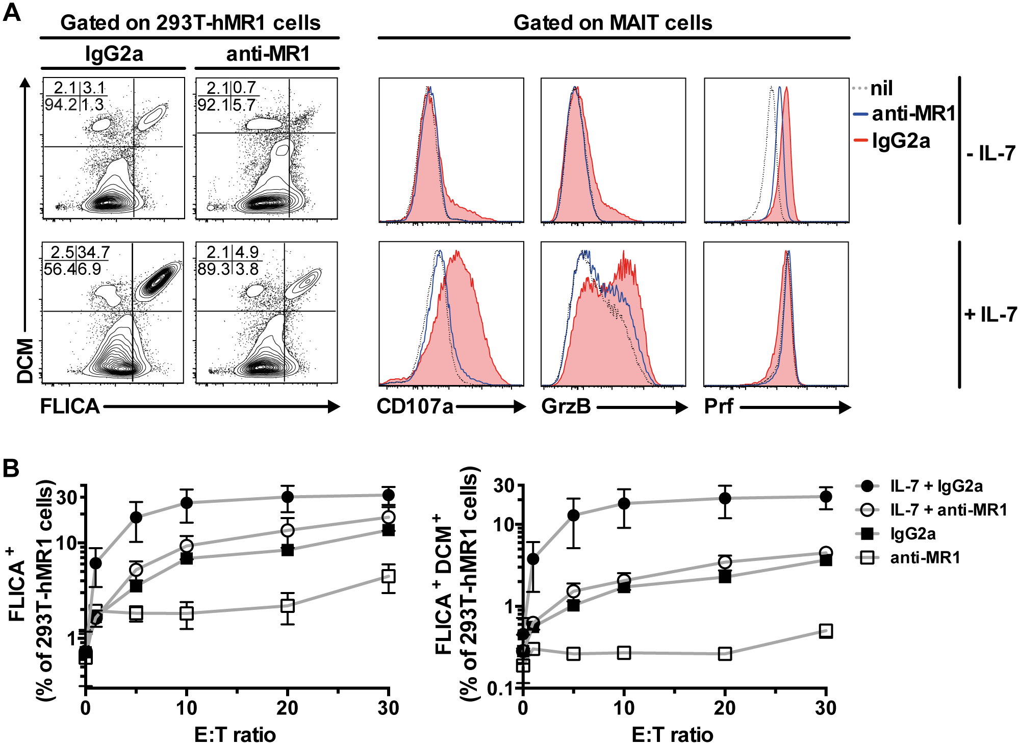 IL-7 potently enhances MAIT cell killing of bacteria-exposed cells.