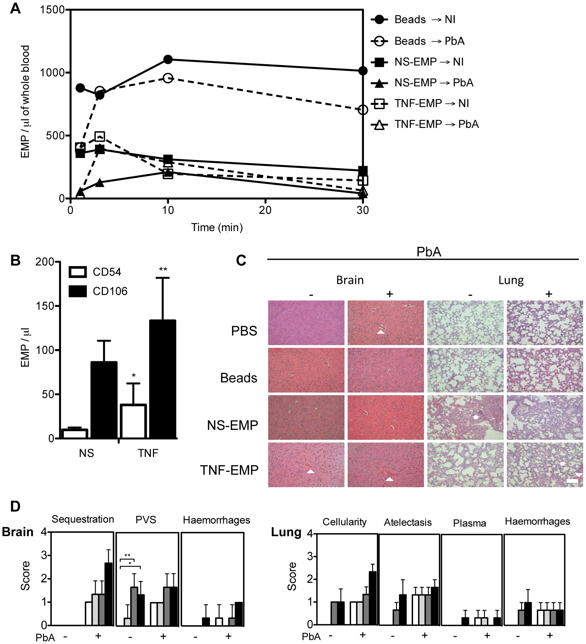 Transferred EMP generated <i>in vitro</i> induce CM-like pathology in healthy mice.