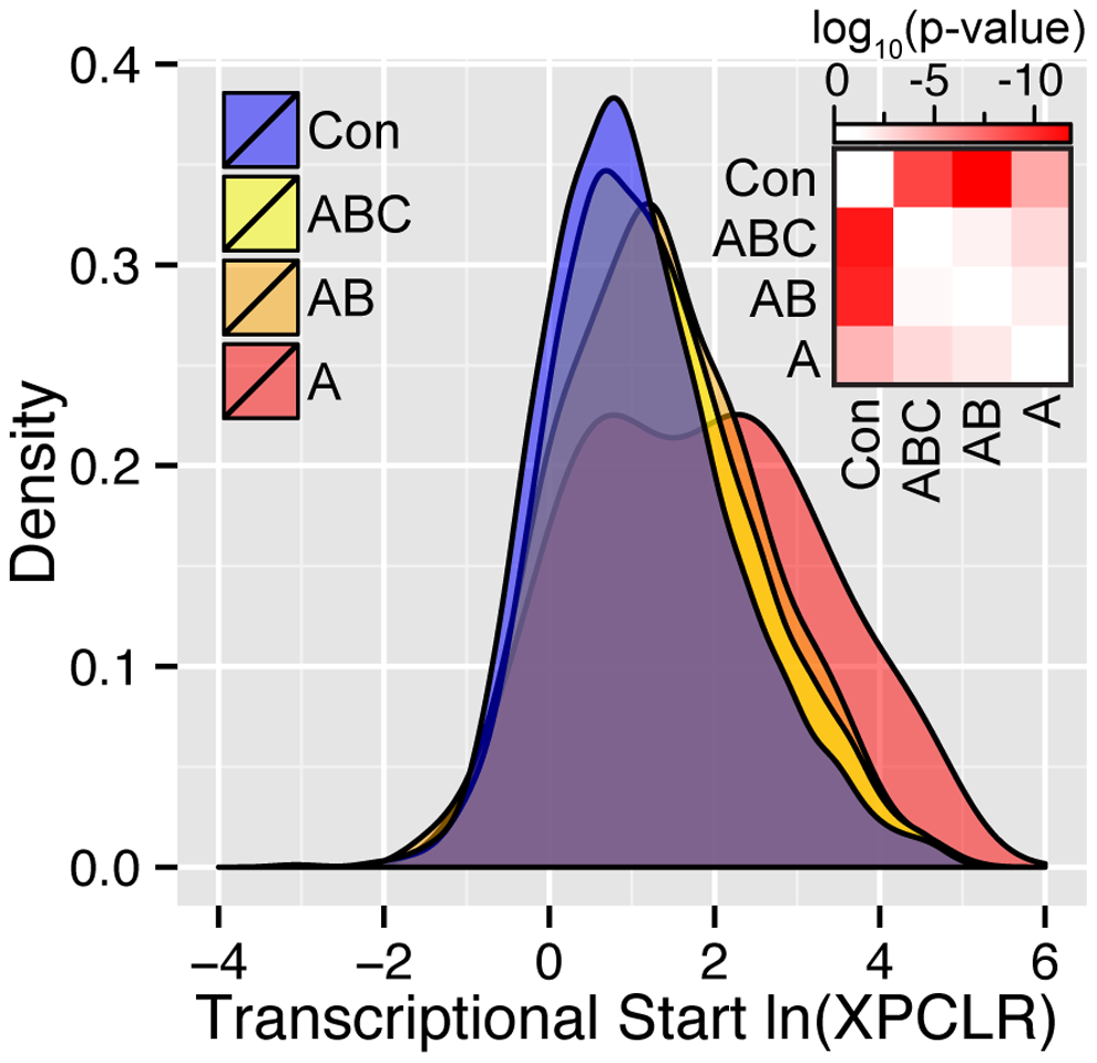 Density plots of the ln(XPCLR) score for the union of conserved versus CCT candidate genes across tissues.