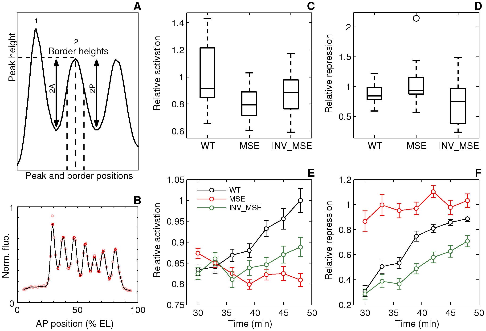 Dynamics of stripe 2 activation and repression.