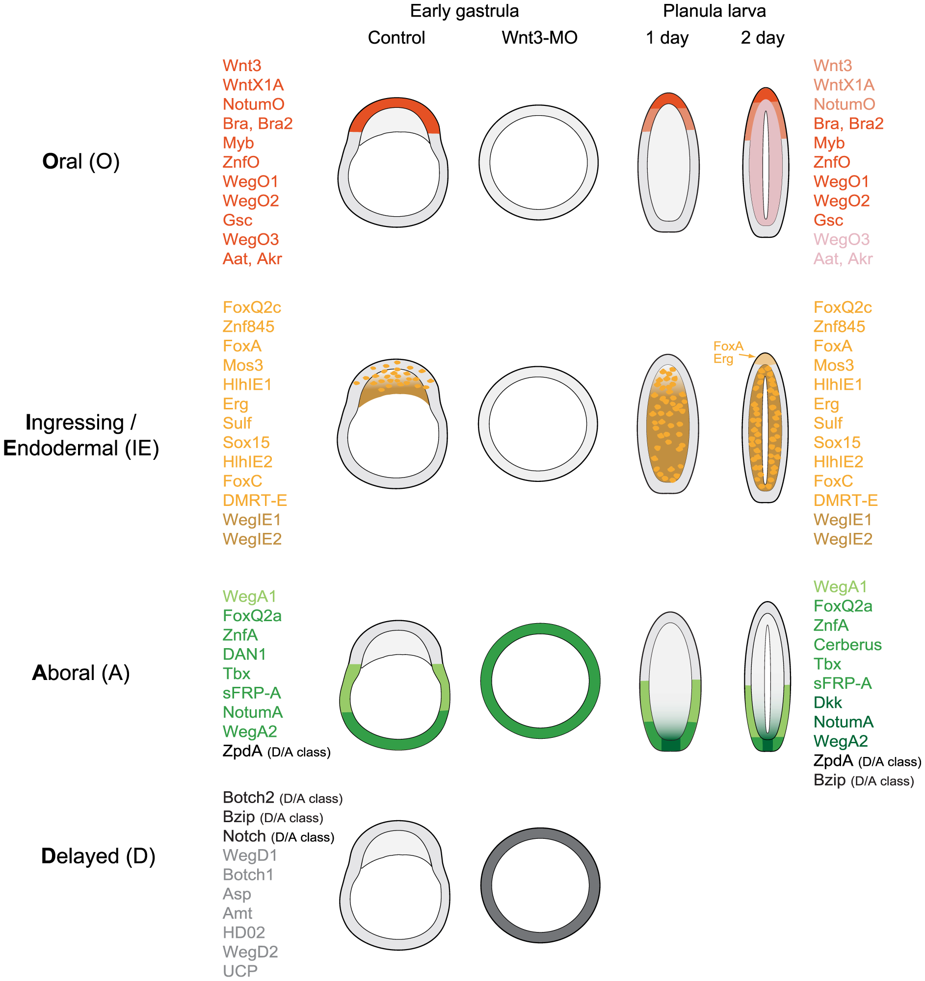 Summary of expression profiles observed for the analyzed transcripts.