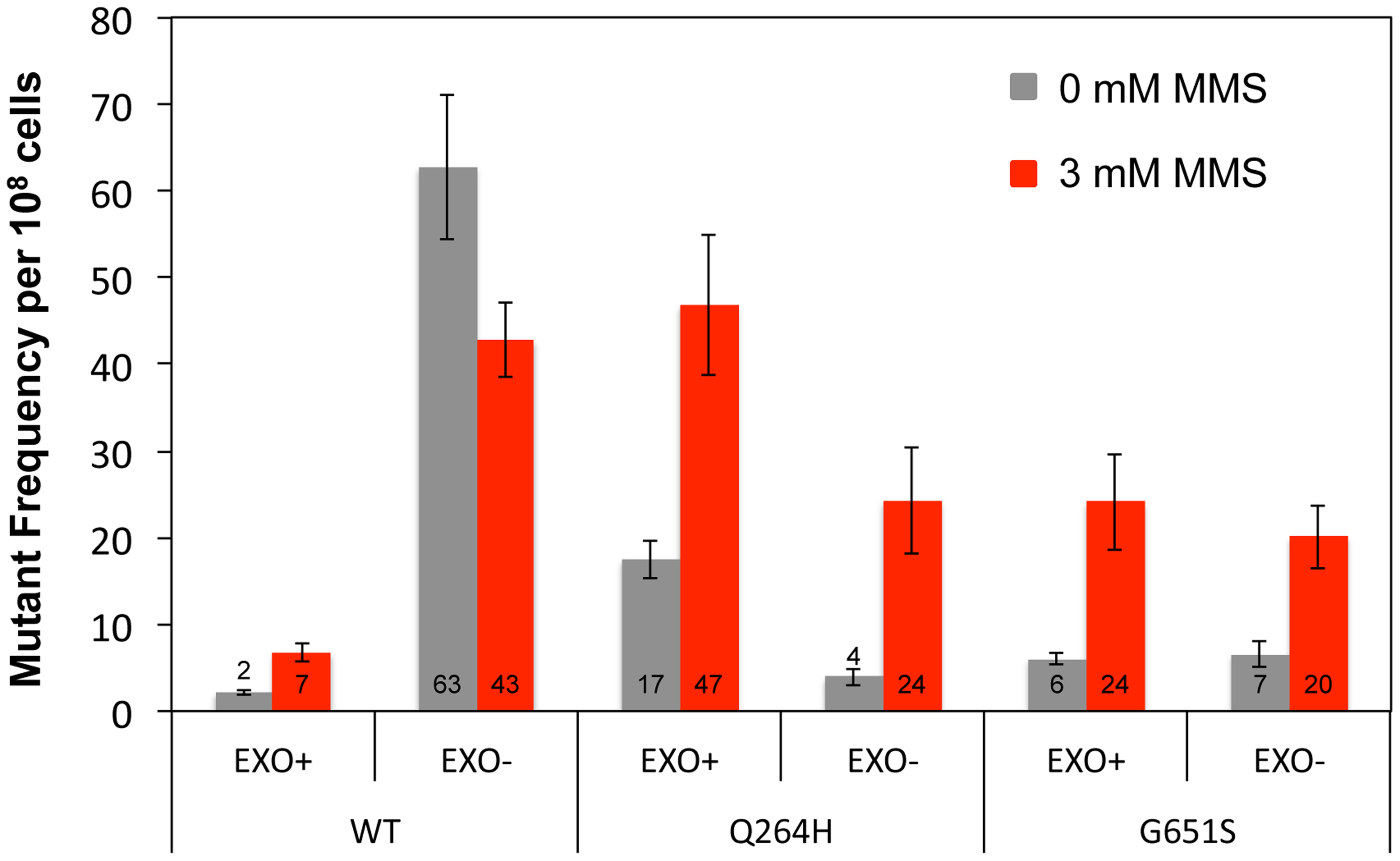 Q264H and G651S Mip1 variants were not significantly involved in mtDNA replication.