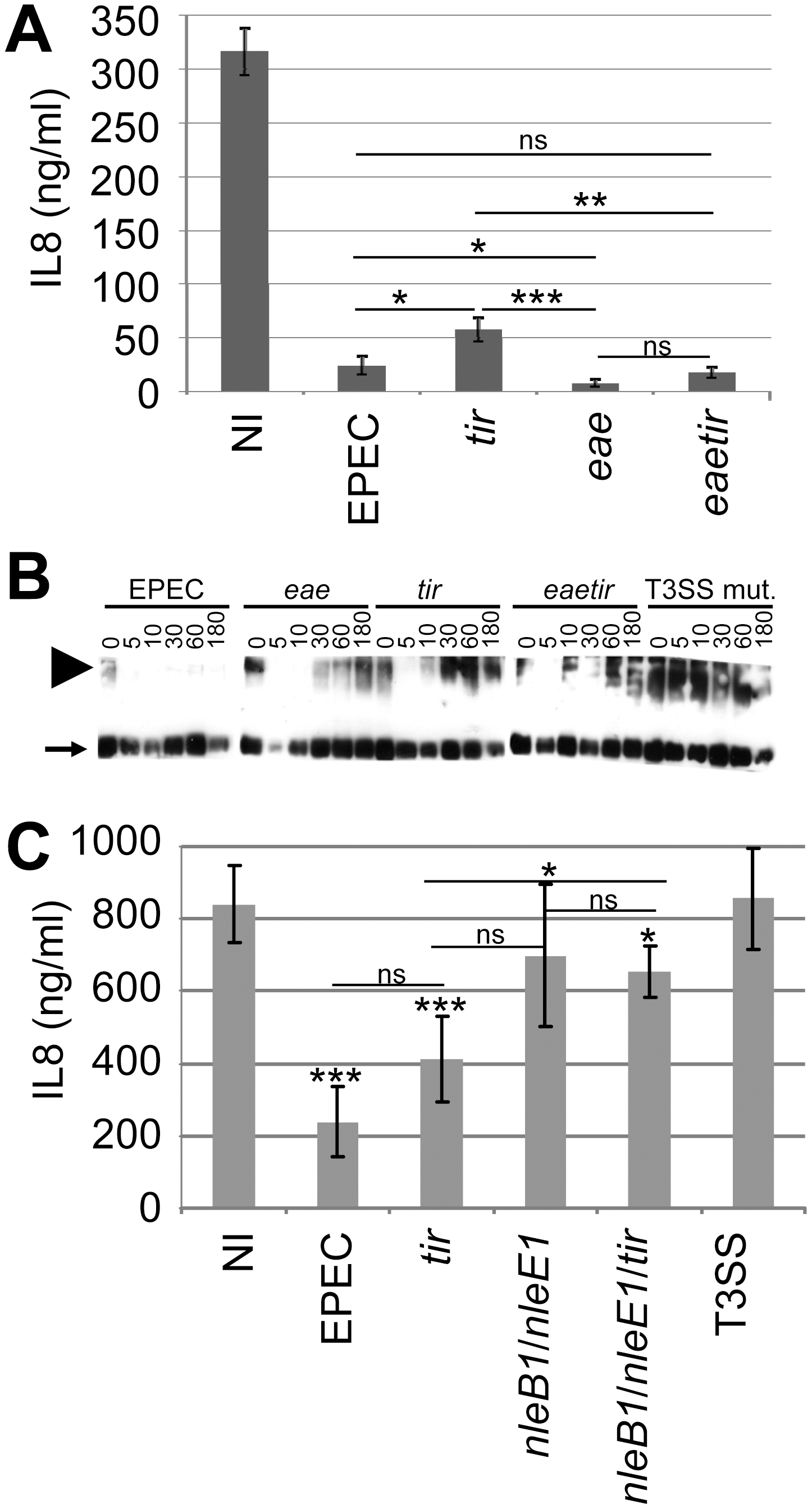 Non-essential contribution of Tir in the EPEC NF-κB inhibitory process.