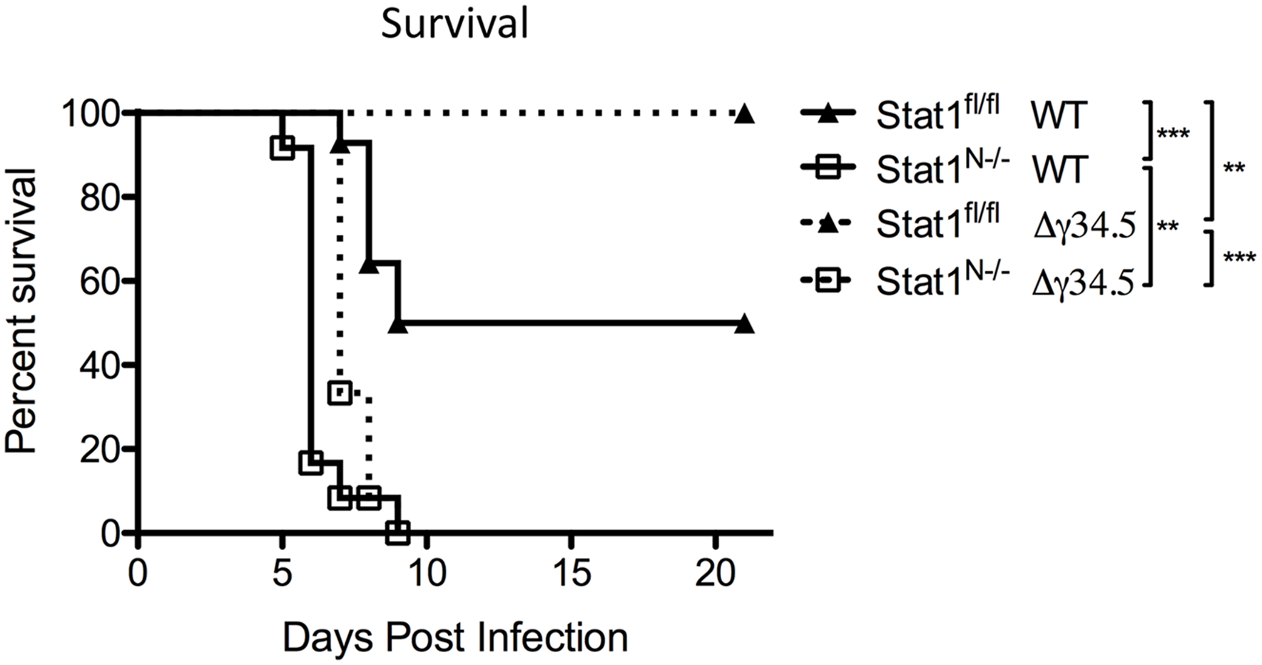 Neural STAT1 expression is required for host survival.