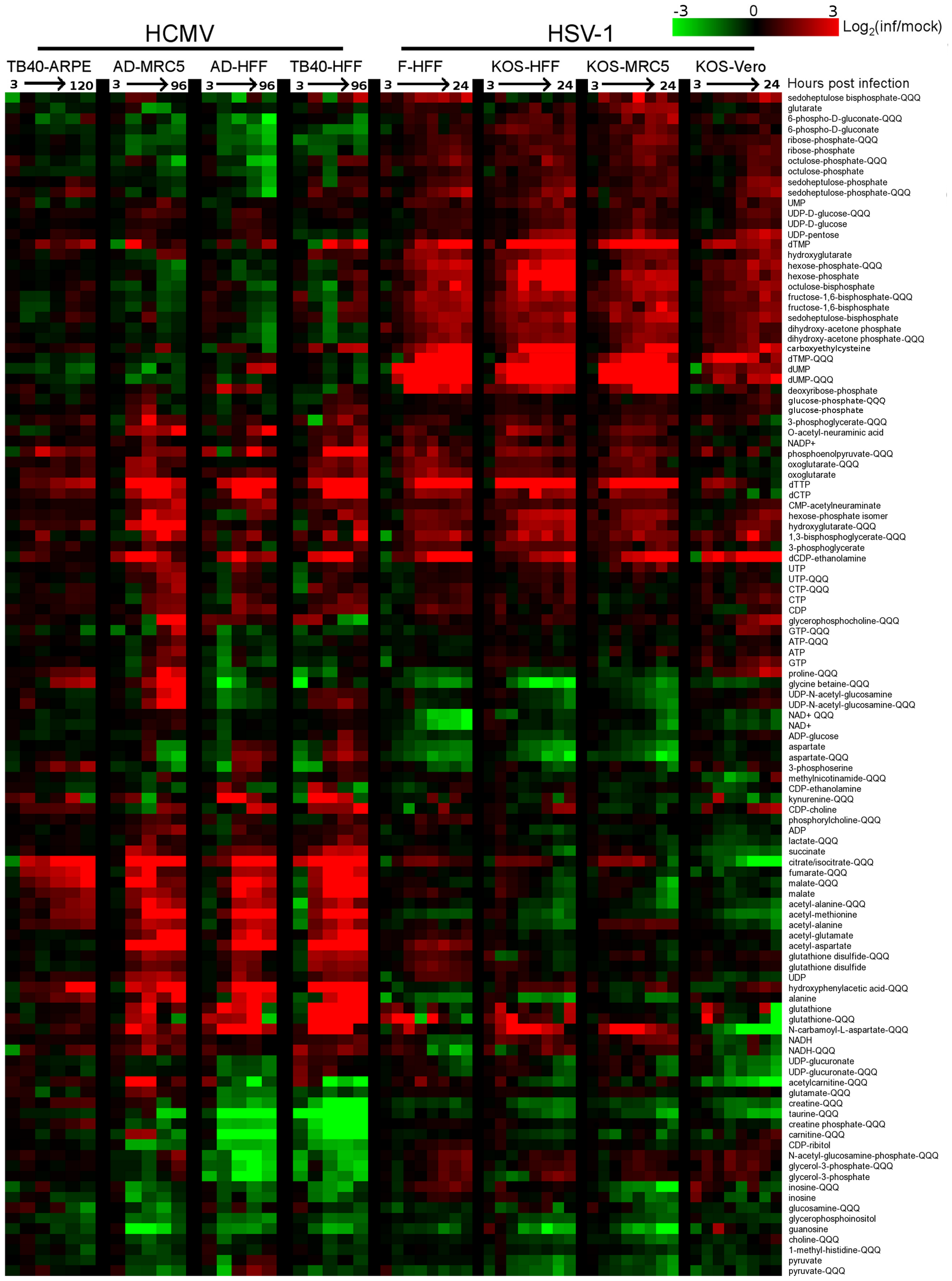 Divergent metabolic profiles of HCMV- and HSV-1-infected cells.