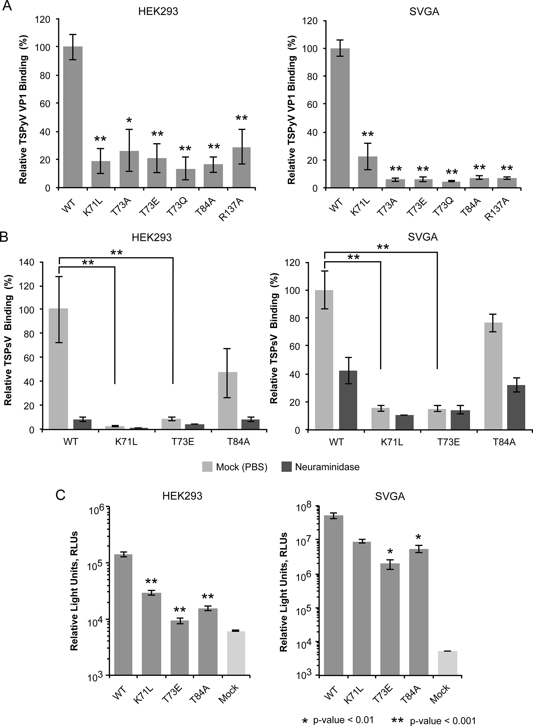 Cell binding and PsV infection of TSPyV mutants.