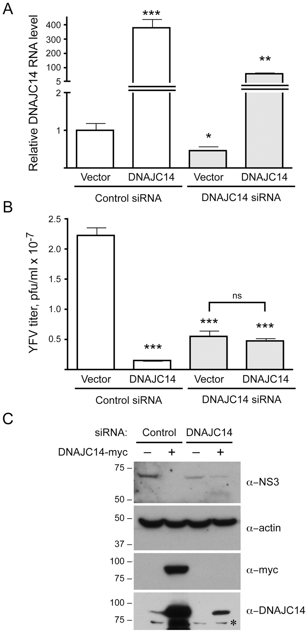 Modulation of DNAJC14 levels by siRNA alters YFV replication.