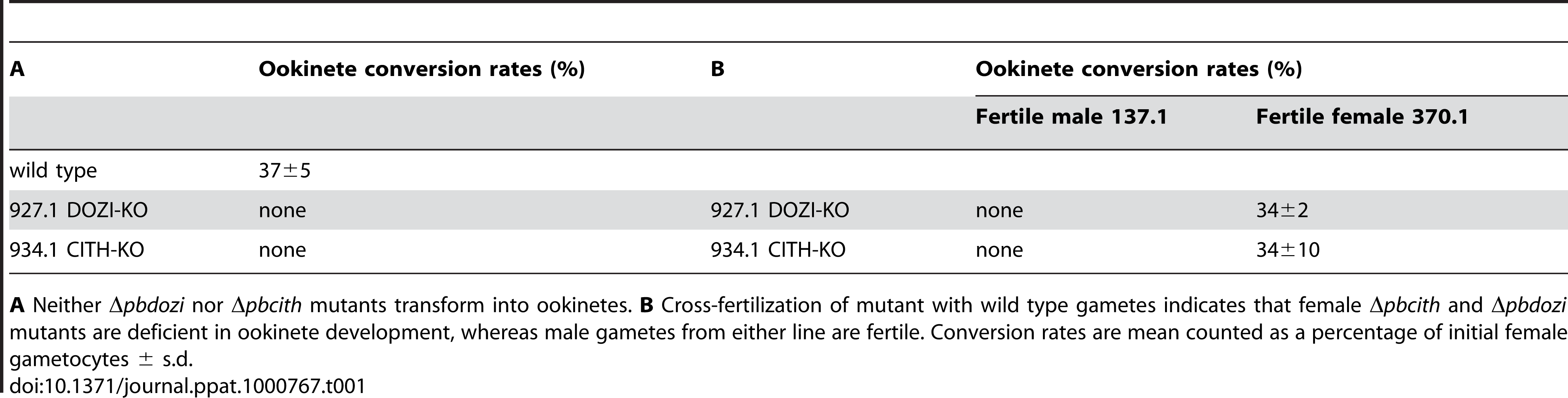 Ookinete formation in wild type and mutant parasite lines.