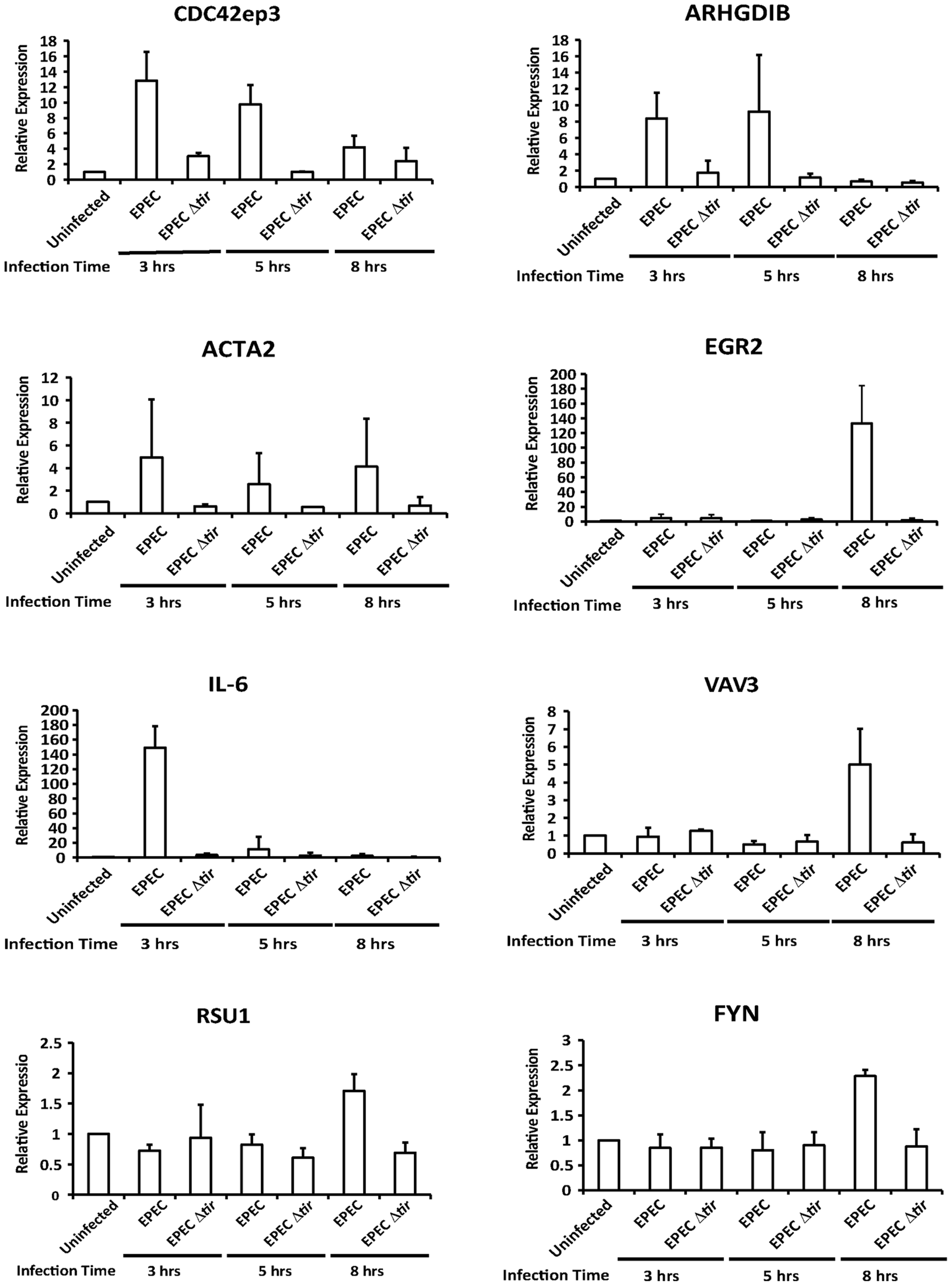 Transcription of SRF target genes is activated by EPEC infection.