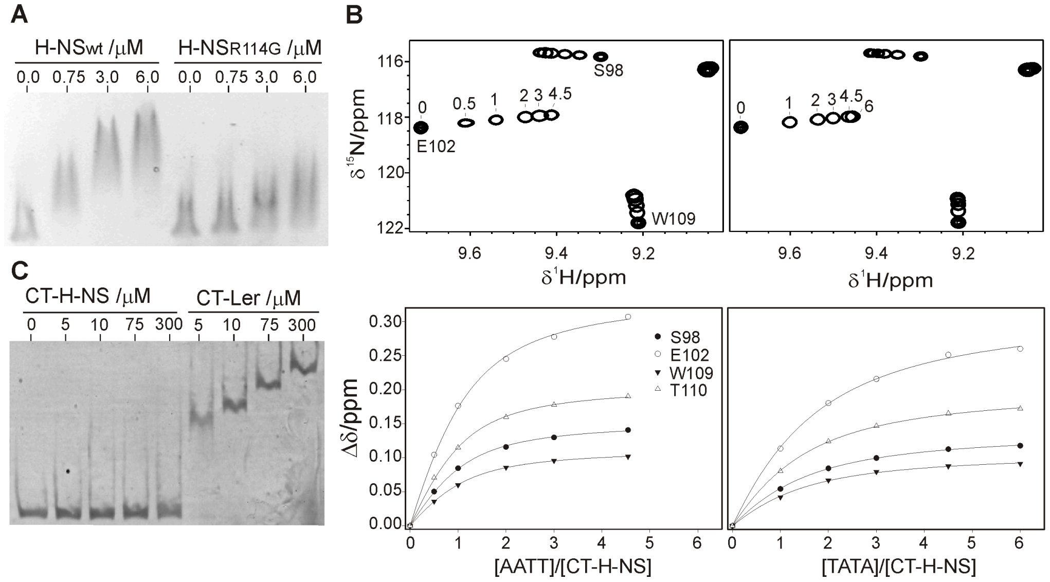 The DNA-binding domains of Ler and H-NS share a similar indirect DNA readout mechanism.