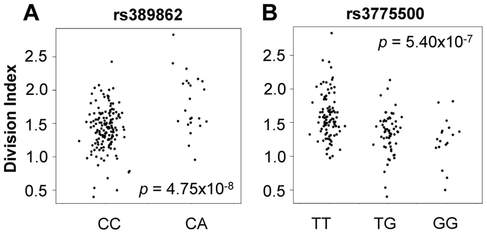 Genome-wide association to division index (the average number of division undergone by all cells).