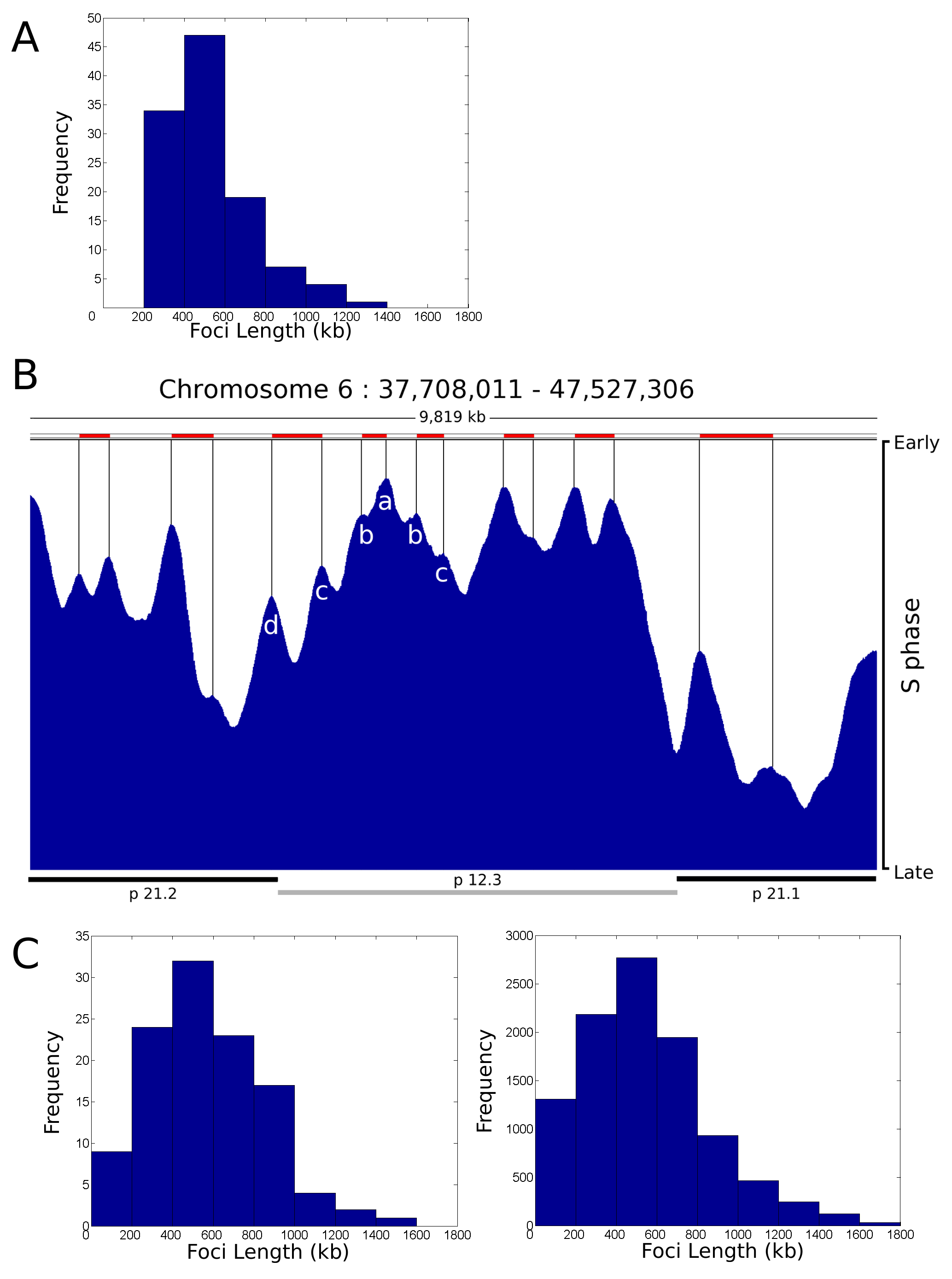 Replication timing domains correlate with DNA foci.