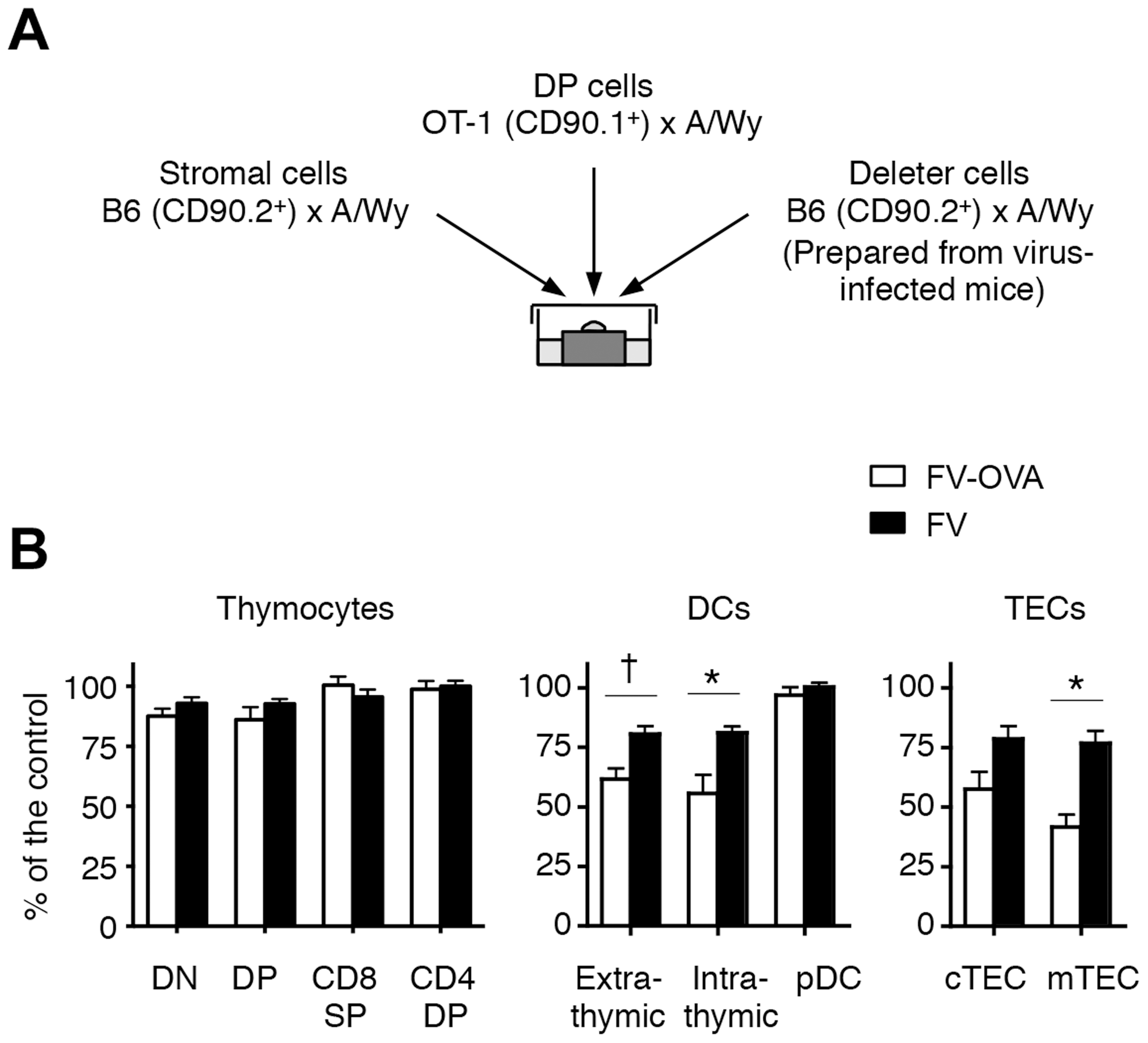 Thymic DCs and TECs are the major deleters of FV-specific thymocytes.