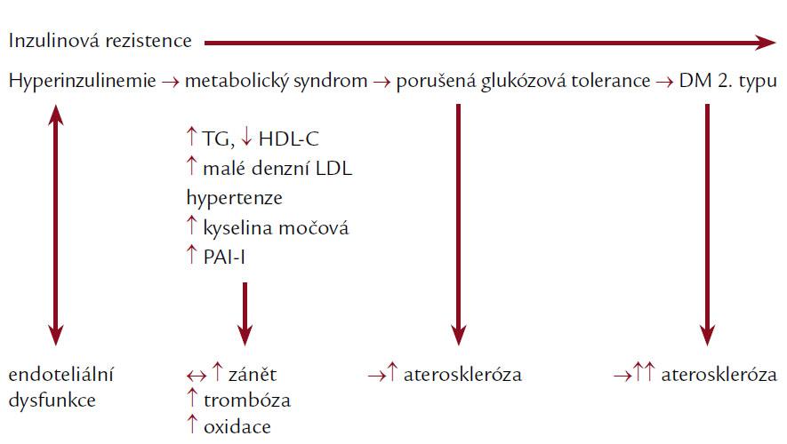 Progrese inzulinové rezistence do manifestace diabetes mellitus 2. typu probíhá zhruba současně s progresí endoteliální dysfunkce do pokročilé aterosklerotické léze [13].