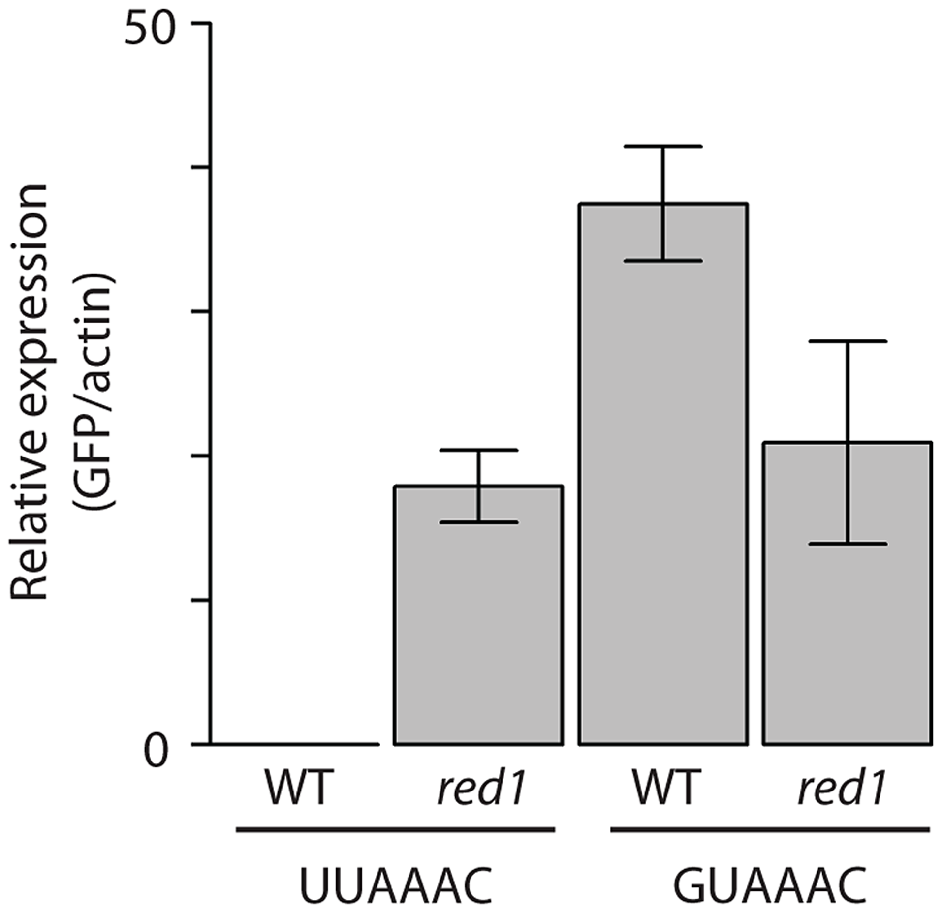 Functional validation of the <i>red1</i>-associated motif.