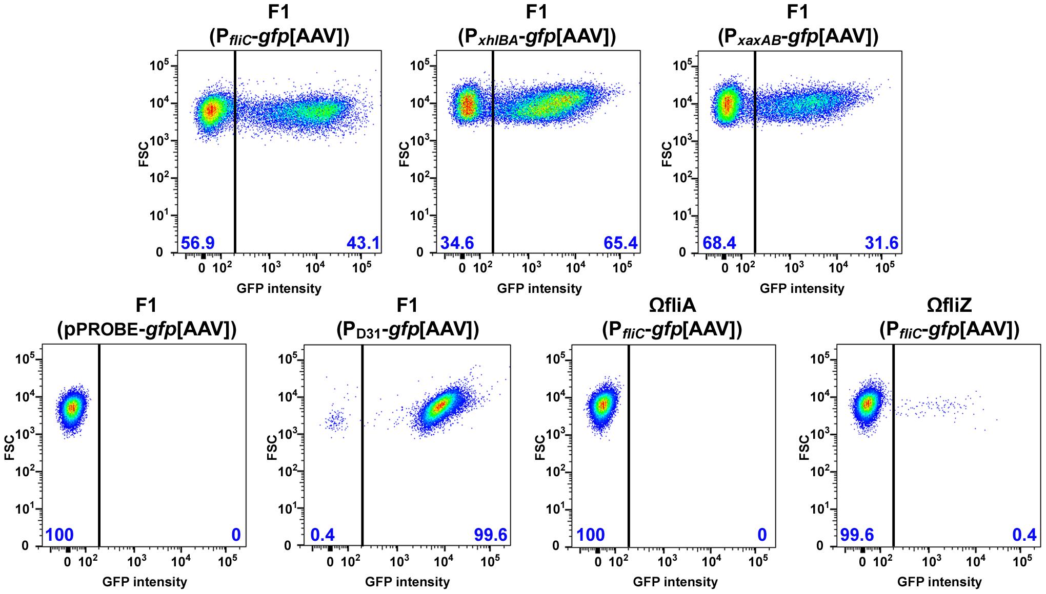 Bimodal expression of flagellin and hemolysin genes in <i>Xenorhabdus</i>.
