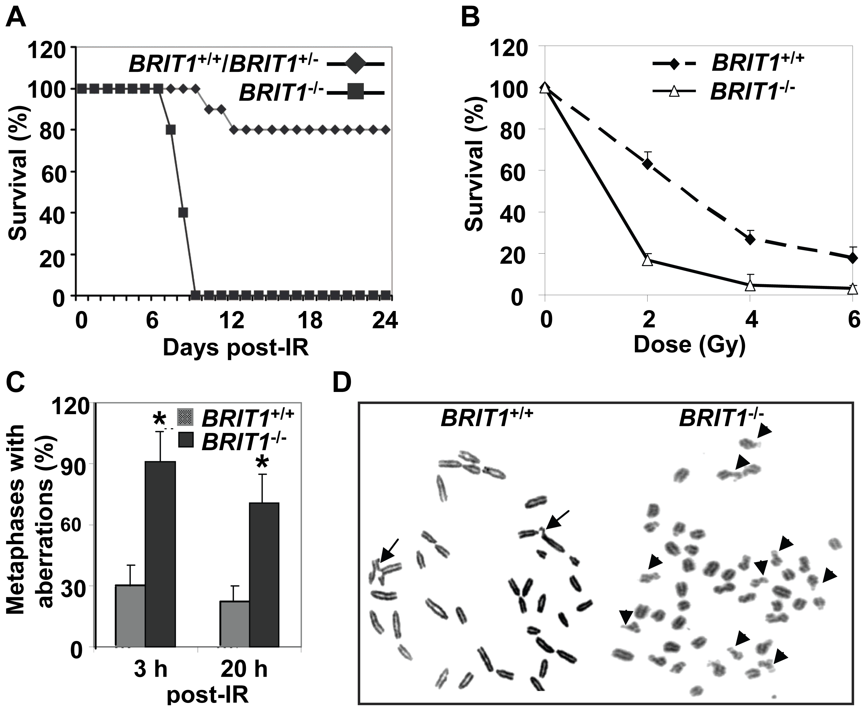 <i>BRIT1</i>-deficient mice and MEFs showed hypersensitive to γ-irradiation.