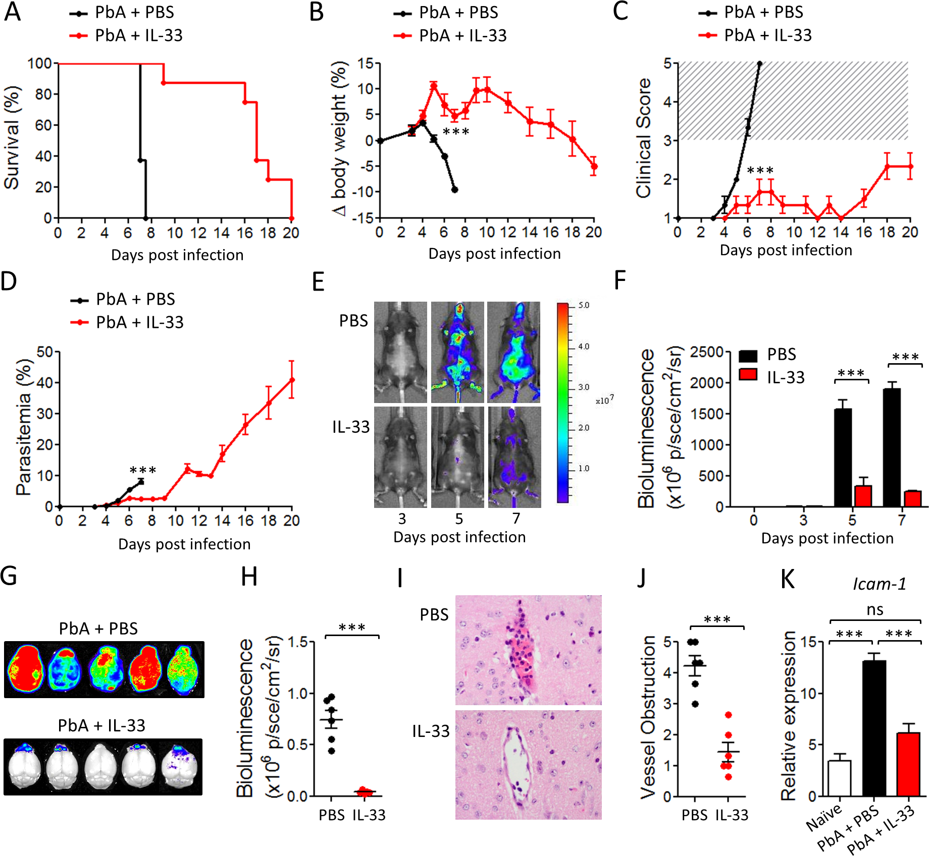 IL-33 protects mice from PbA-induced cerebral malaria.