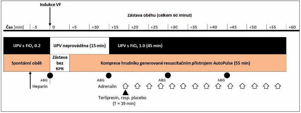 Časový průběh experimentu Bílé šipky znázorňují aplikaci jednotlivých dávek adrenalinu, černá šipka označuje podání terlipresinu ve skupině TER, respektive placeba ve skupině ADR. Zkratky: ABG – odběr vzorků na vyšetření krevních plynů, FiO<sub>2</sub> – inspirační frakce kyslíku ve vdechované směsi, UPV – umělá plicní ventilace, VF – fibrilace komor