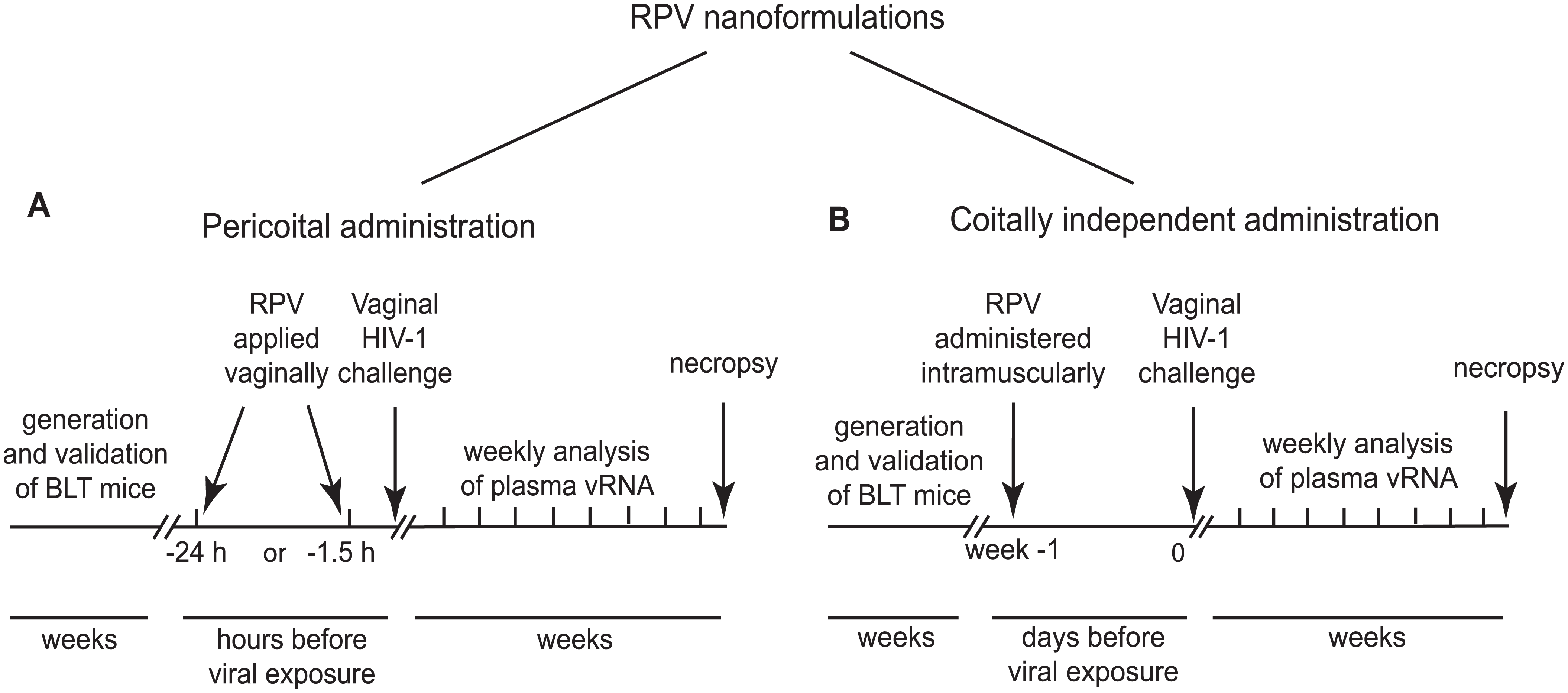 Experimental design for the evaluation of efficacy of RPV nanoformulations in prevention of vaginal HIV transmission in humanized BLT mice.
