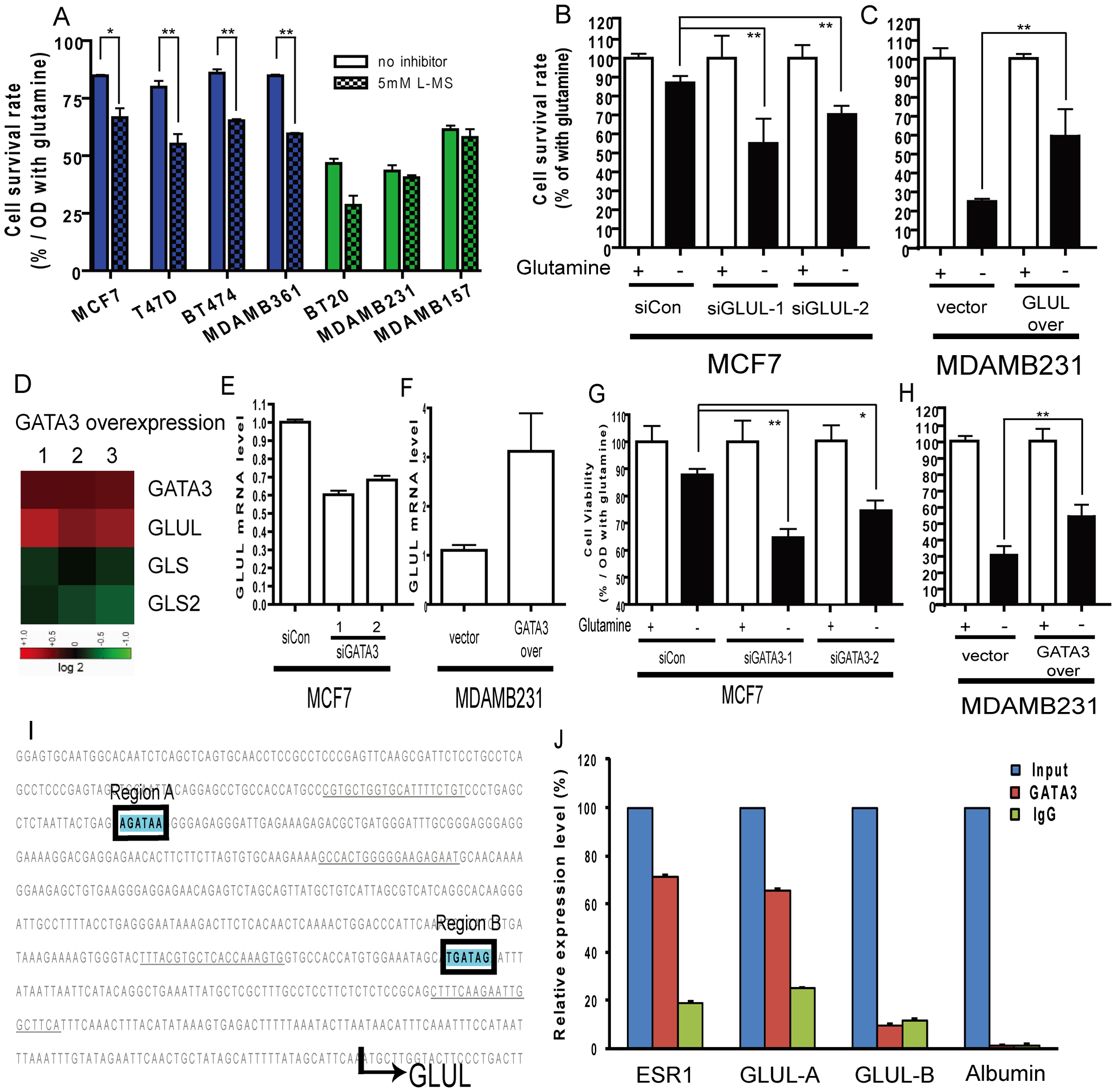 Contribution of luminal expression of GLUL and GATA3 to the glutamine-independence phenotype.