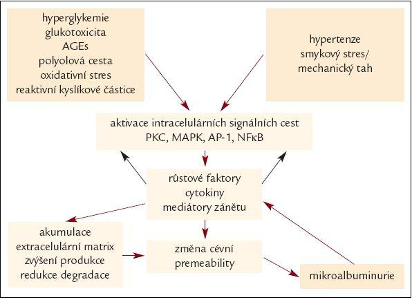 Schéma 1. Patogeneze diabetické nefropatie [1].