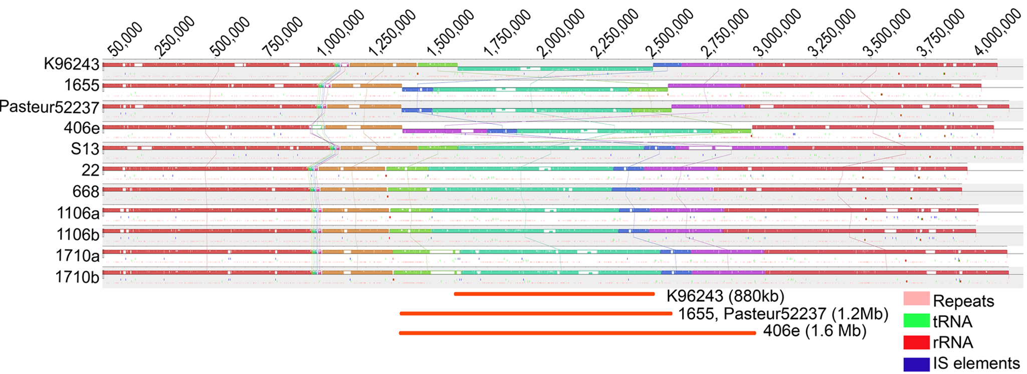 Genome Alignment of Bp Chromosome 1 Across Strains.