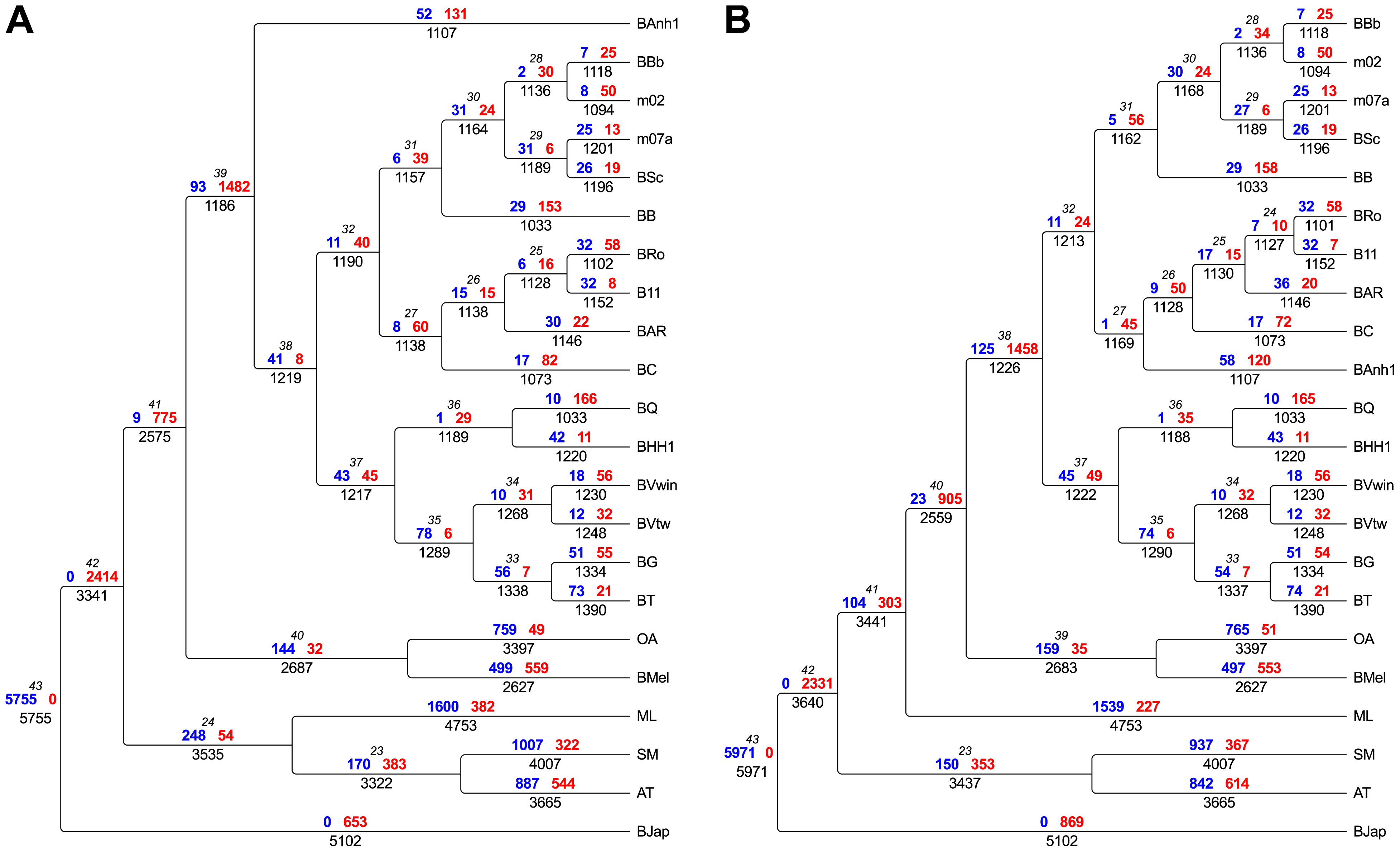 Flux of protein families in <i>Bartonella</i> and related outgroup species.