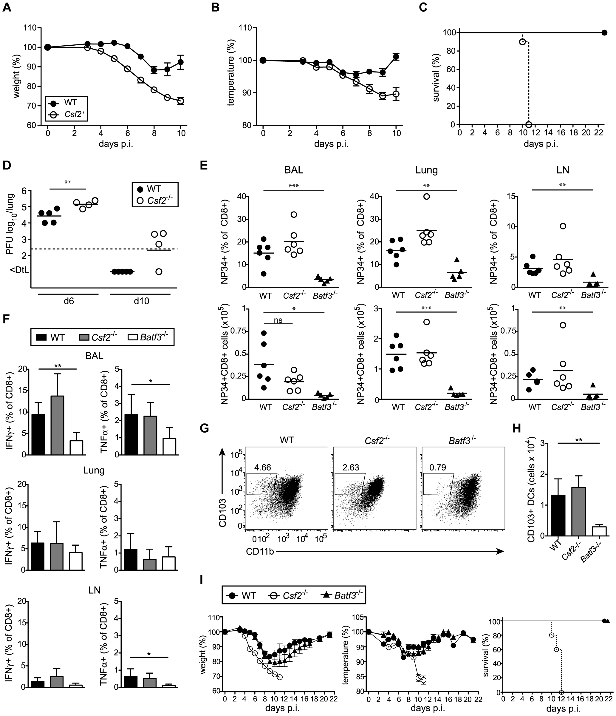 <i>Csf2</i><sup>−/−</sup> mice succumb to influenza virus infection despite intact antiviral T and B cell responses.