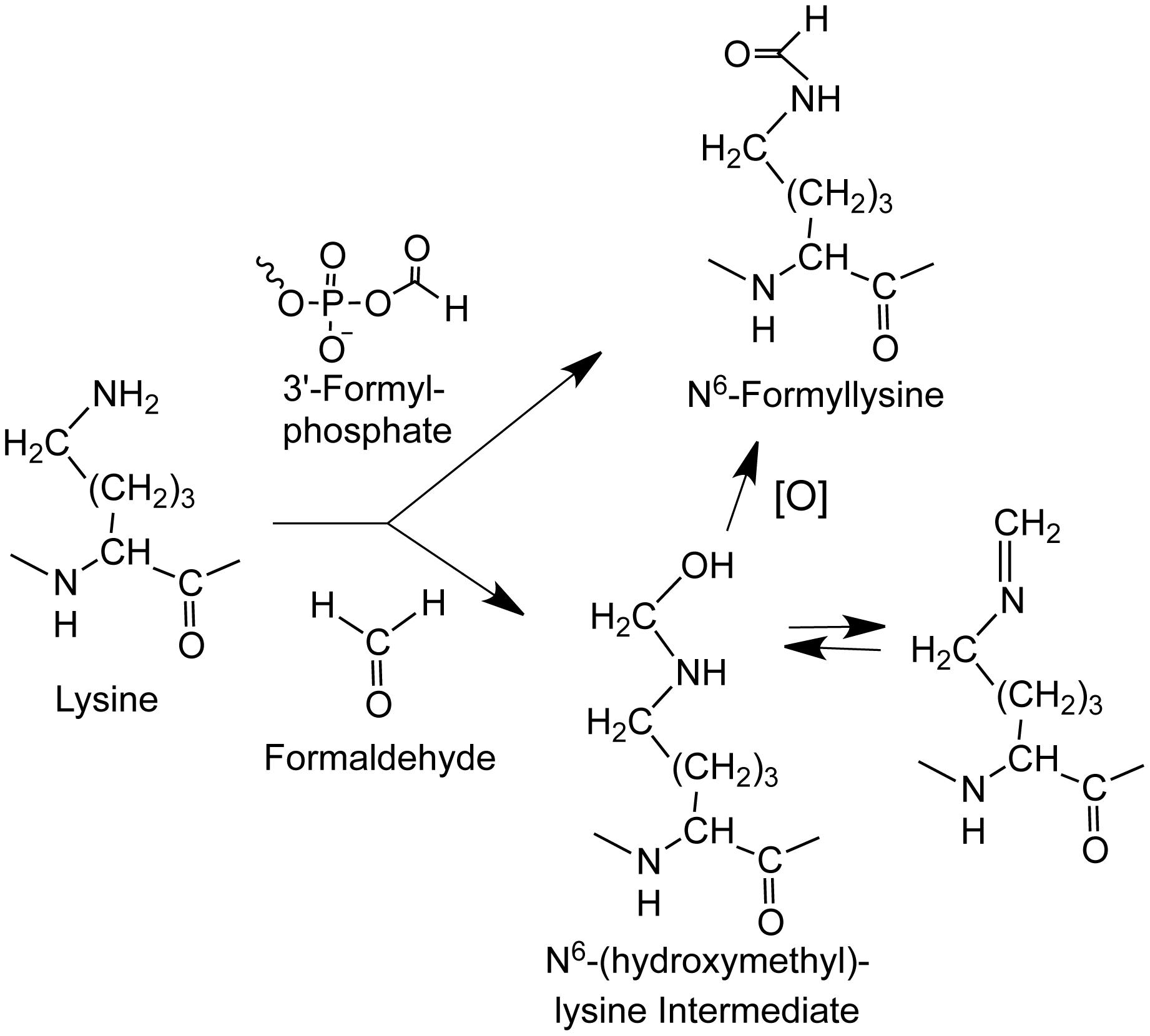 Sources of N<sup>6</sup>-formyllysine.