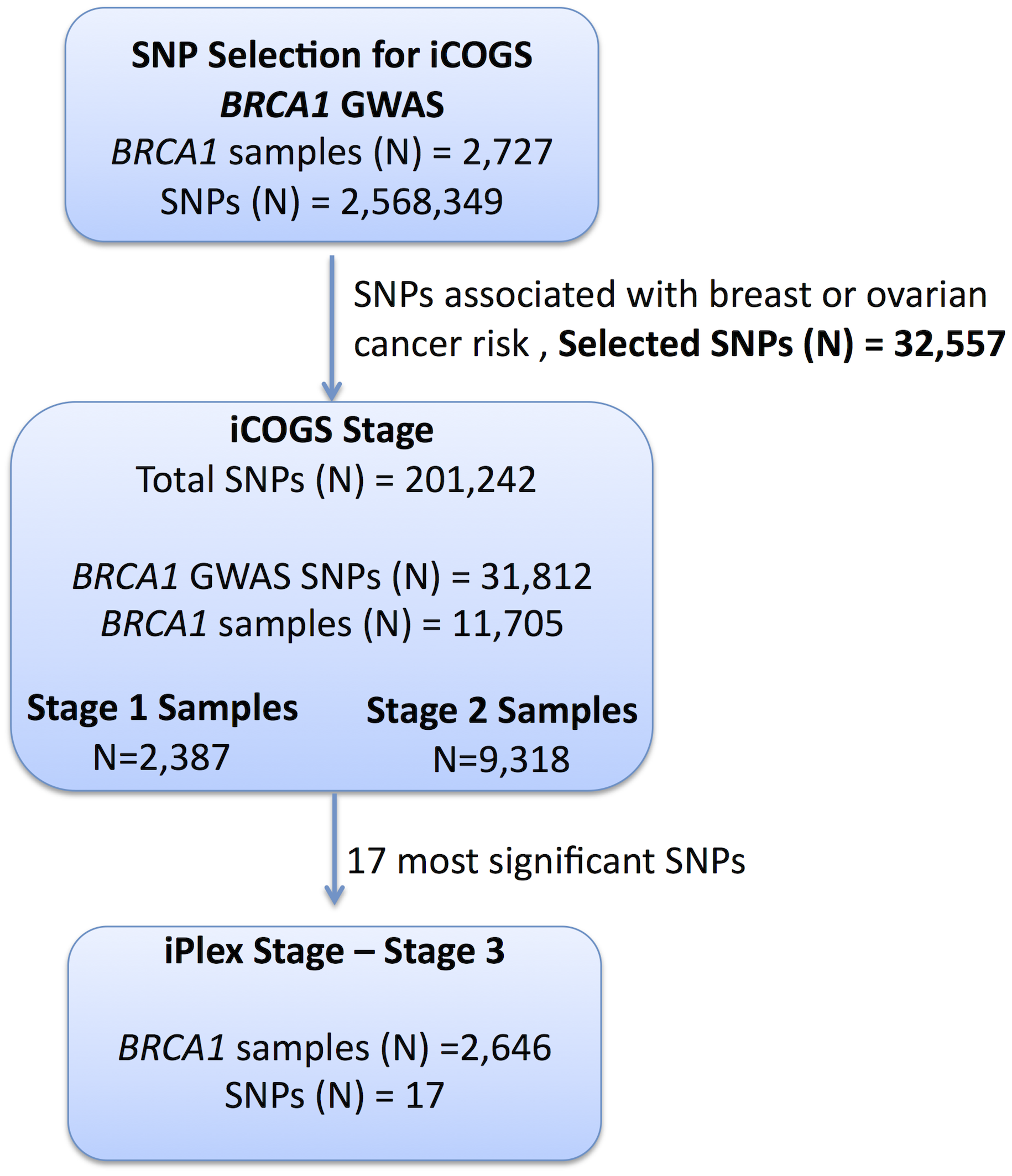 Study design for selection of the SNPs and genotyping of <i>BRCA1</i> samples.