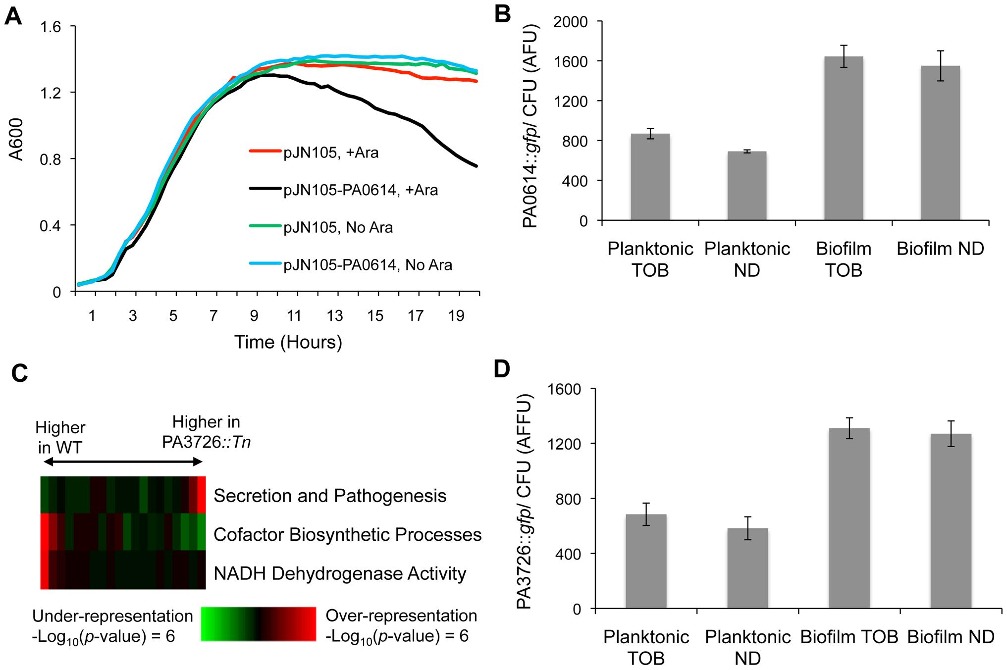 Characterization of loci conferring biofilm-specific tobramycin tolerance.