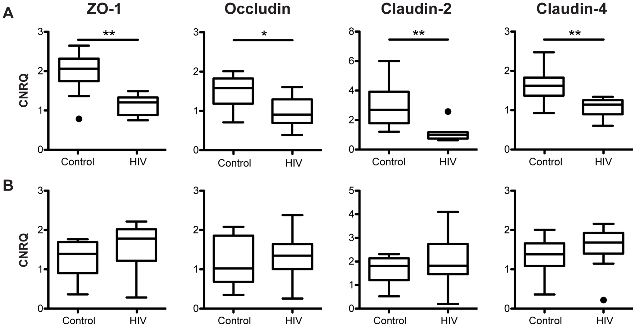 Tight junctional transcripts are decreased in the colon, not the terminal ileum, of HIV+ individuals.