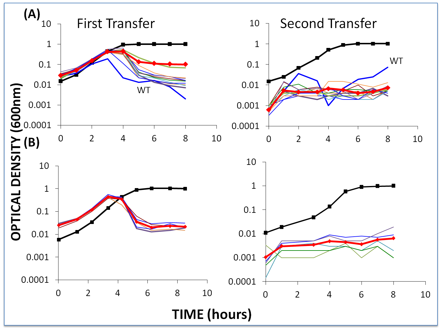 Changes in optical density of cultures with <i>S. thermophilus</i> first- and second-order BIMs and WT cells with low initial densities of WT phage.