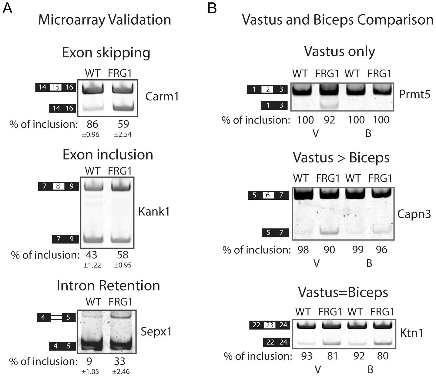 RT–PCR validation of splicing events belonging to different classes.