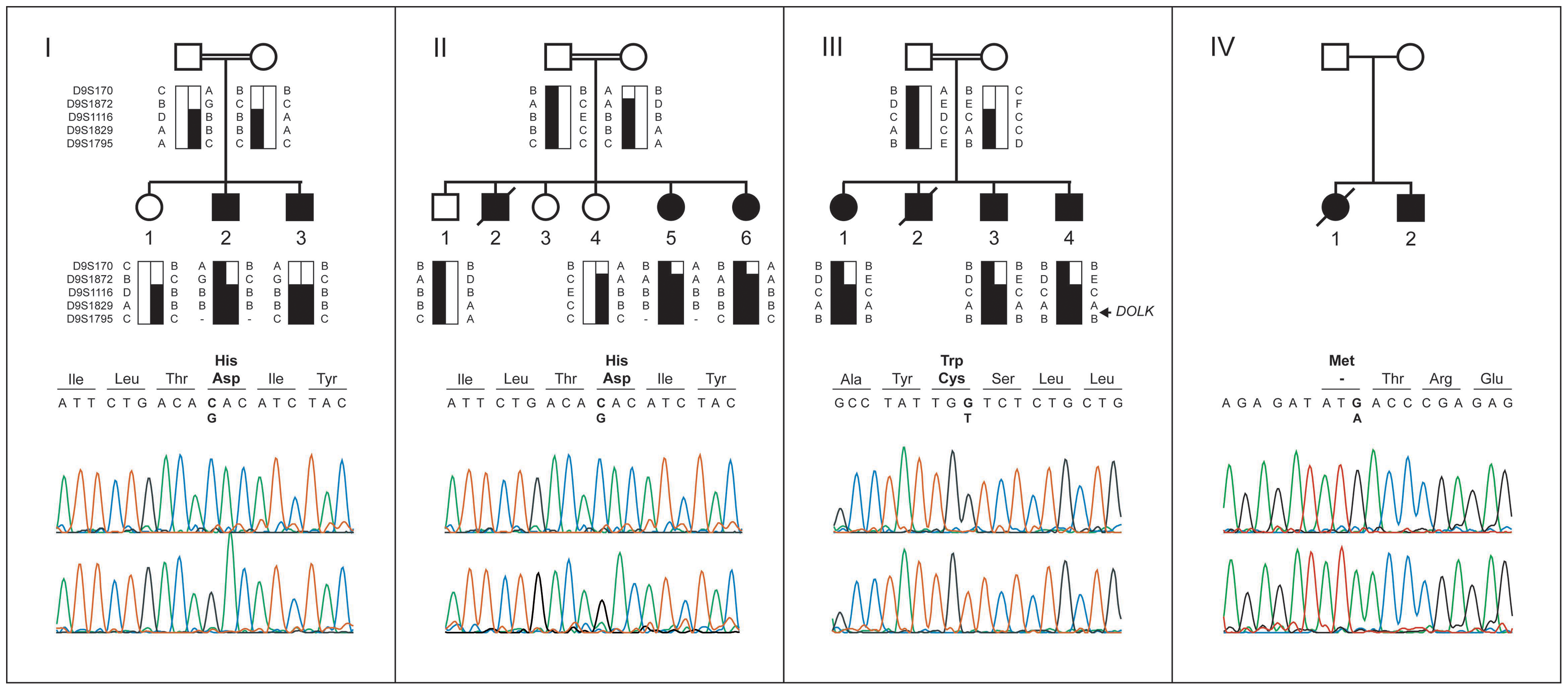 Pedigrees, haplotypes, and mutation analysis of families I through IV.