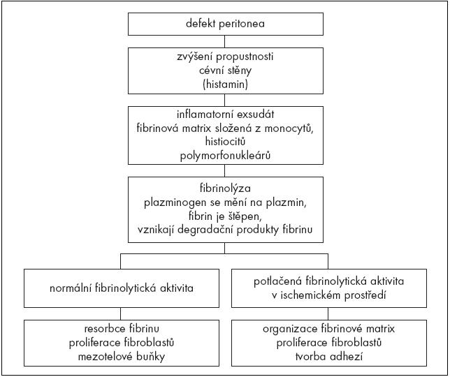 Schéma 1. Přehled způsobů hojení peritonea.