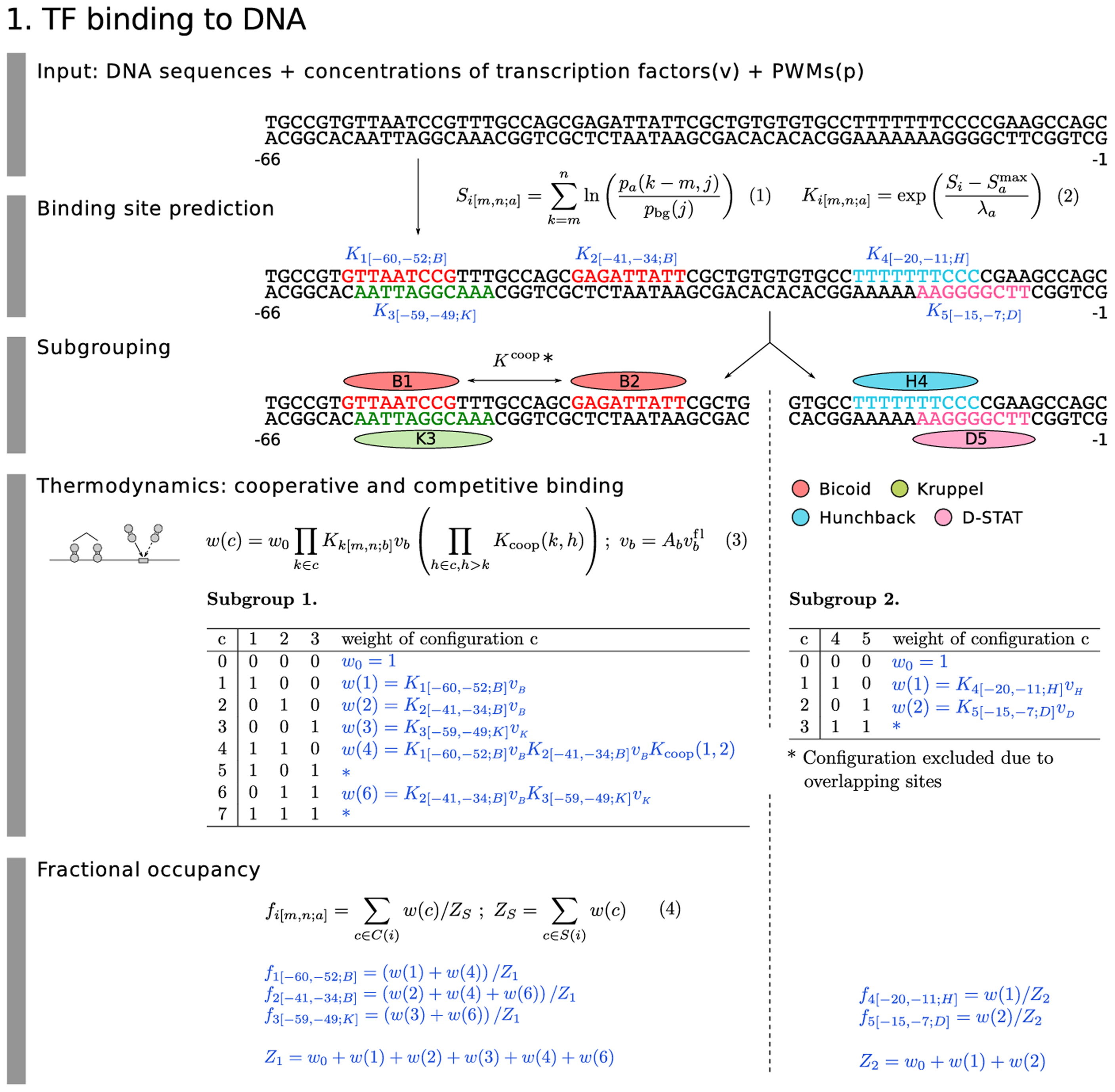 Model equations: TF binding to DNA.