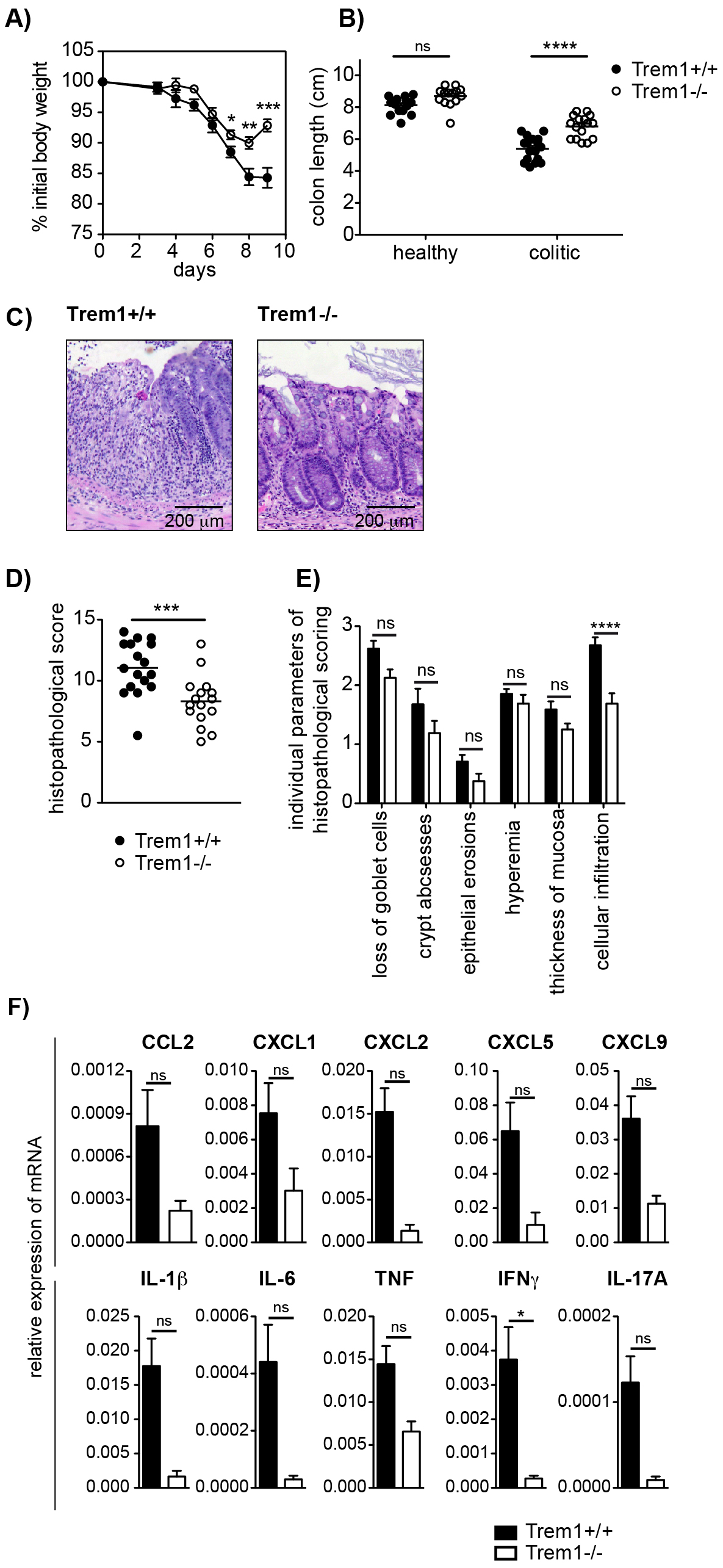 Attenuated dextran sodium-sulfate (DSS)-induced colitis in <i>Trem1<sup>−/−</sup></i> mice.
