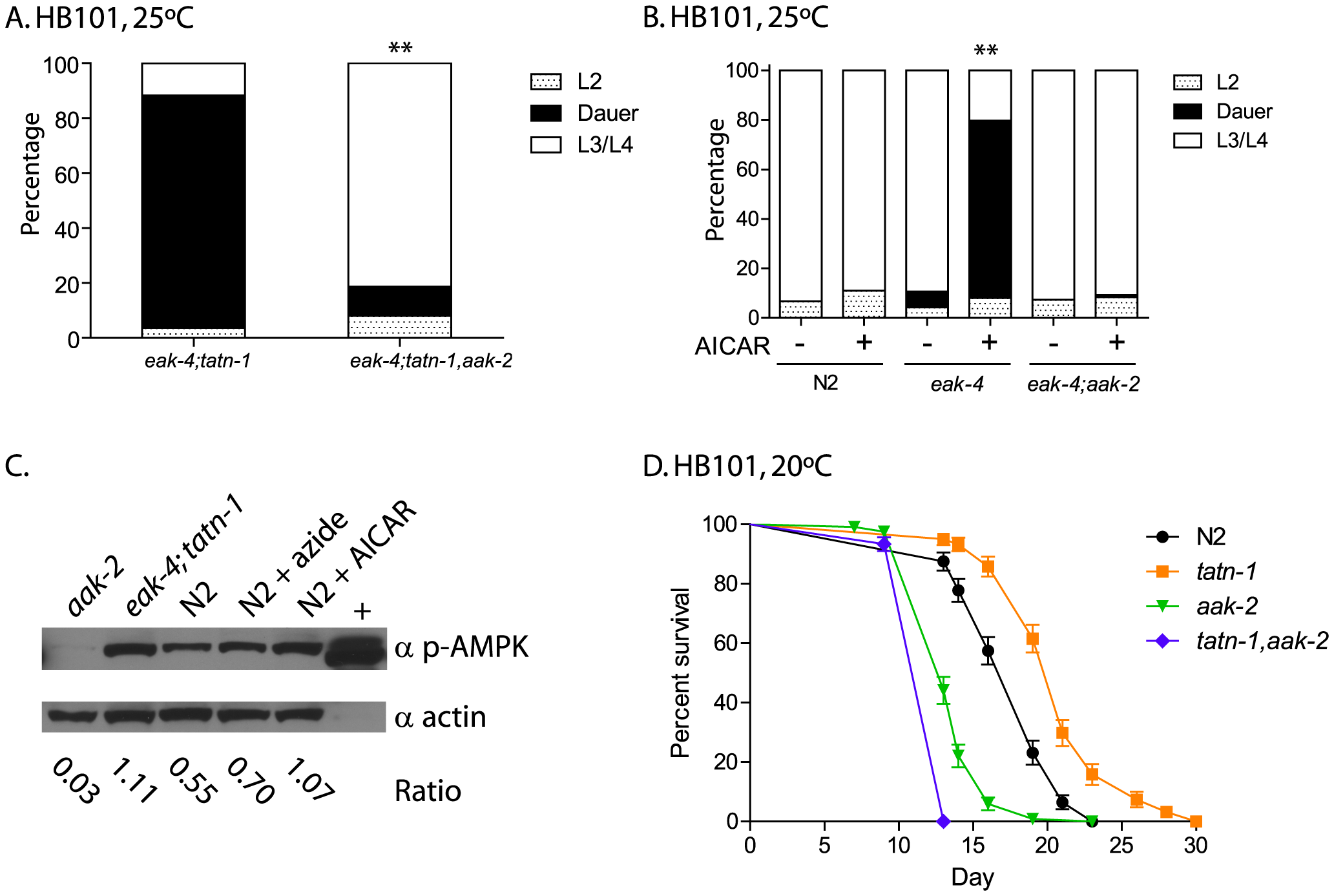 <i>aak-2</i> activity is necessary and sufficient for <i>tatn-1</i> effects on development and longevity.