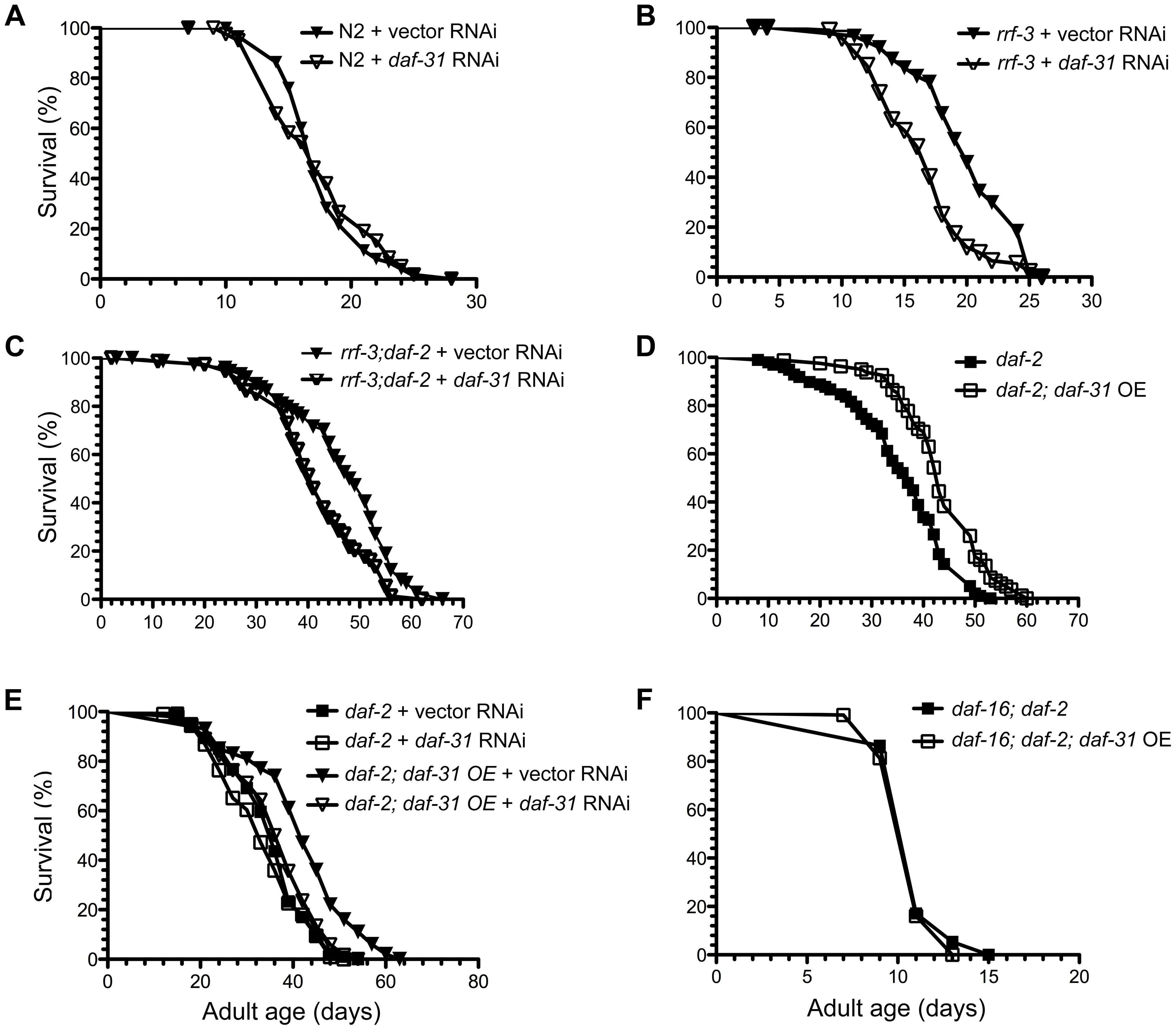 Influence of <i>daf-31</i> on <i>C. elegans</i> lifespan.