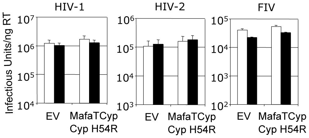 Mutation H54R in the Cyp domain abrogates Mafa TRIMCyp2's antiviral activity against HIV-1 and FIV.