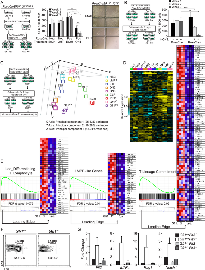 Gfi1 is required to enforce ICN1 activation of lymphoid genes.