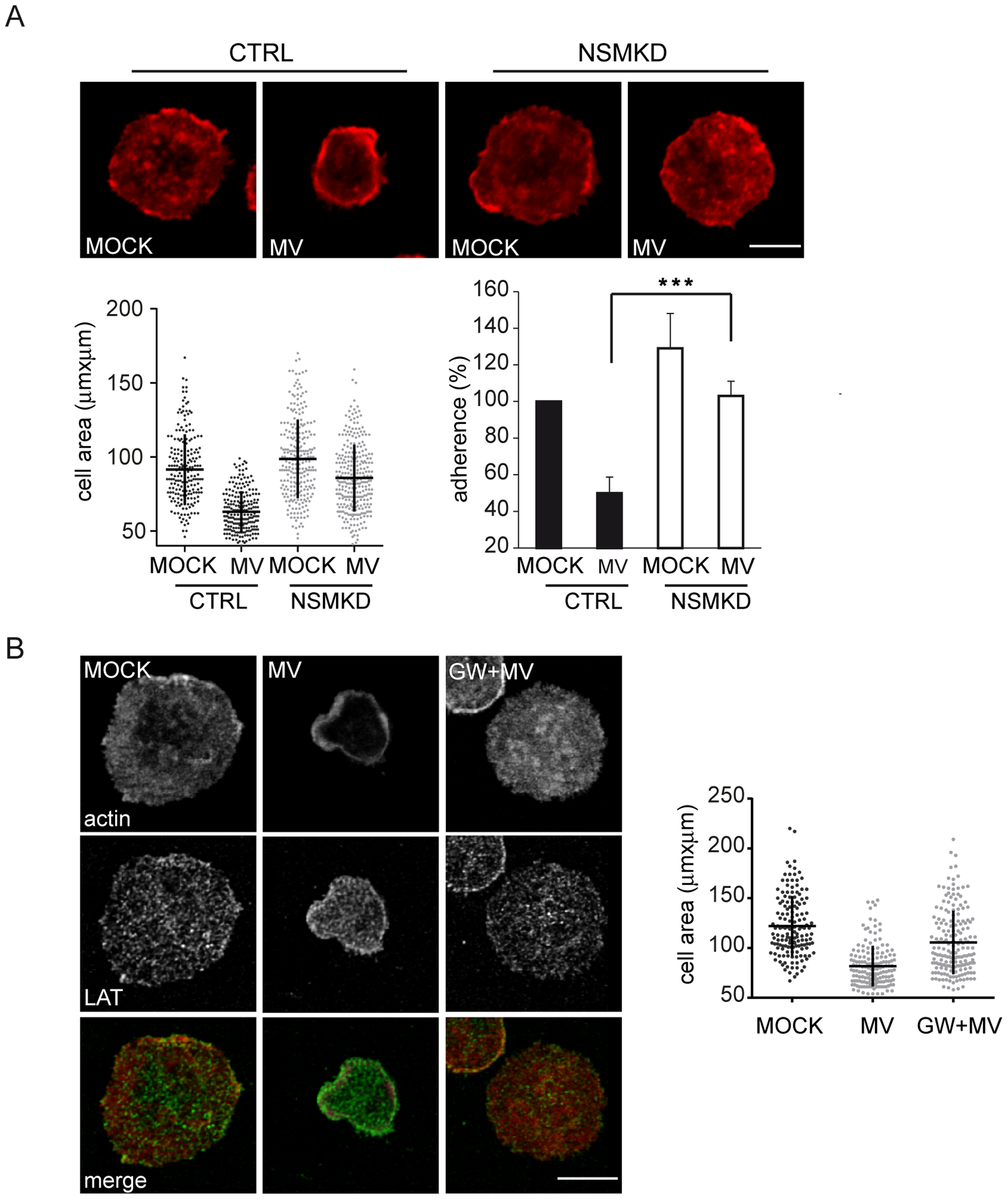 MV-mediated NSM activation accounts for the loss of spreading responses.
