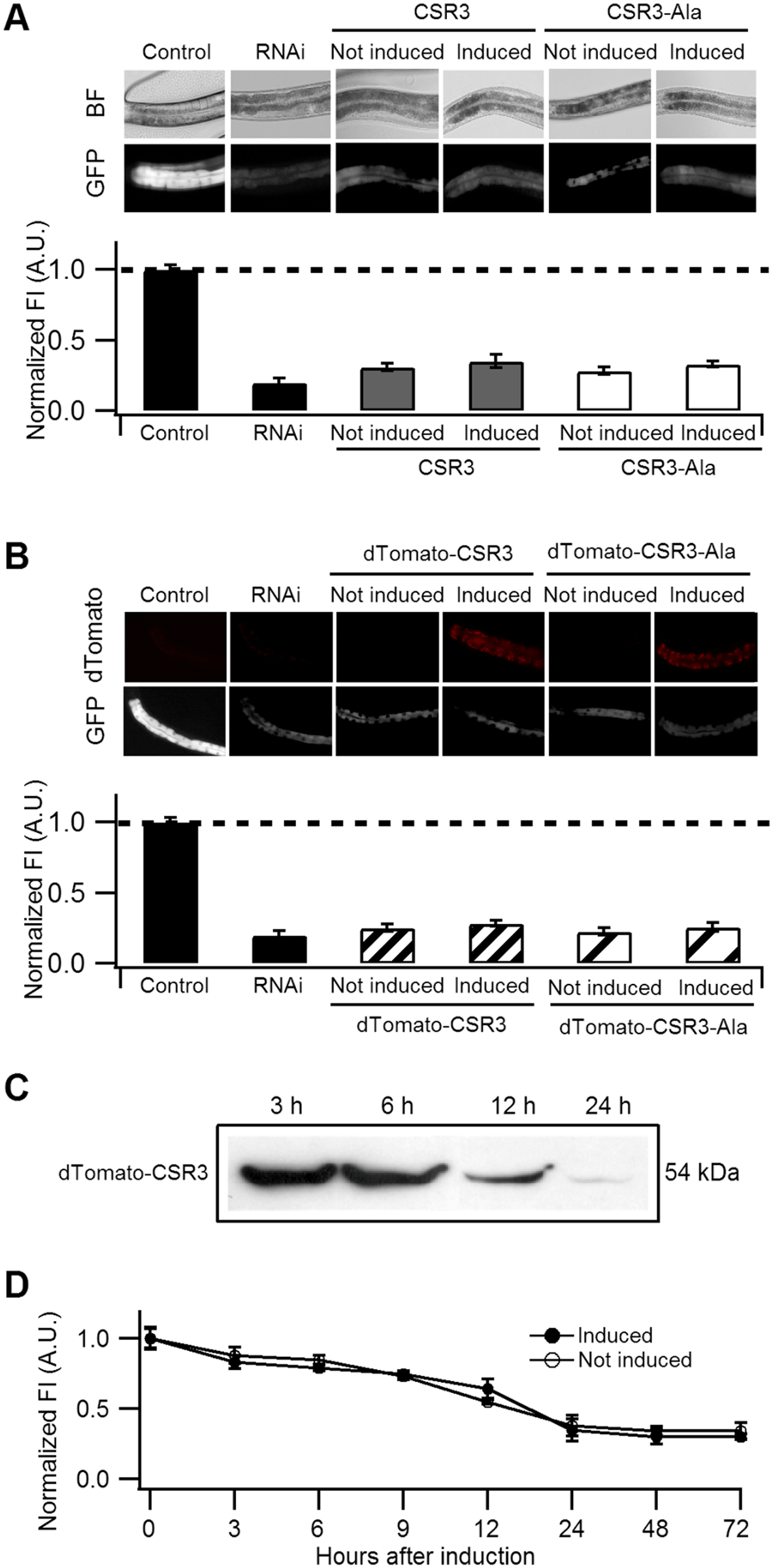 Ability of CSR3 and CSR3-Ala to interfere with <i>gfp</i> silencing in <i>gfp</i>-transgenic <i>C</i>. <i>elegans</i> (strain RT476) expressing GFP under an intestine-specific promoter.