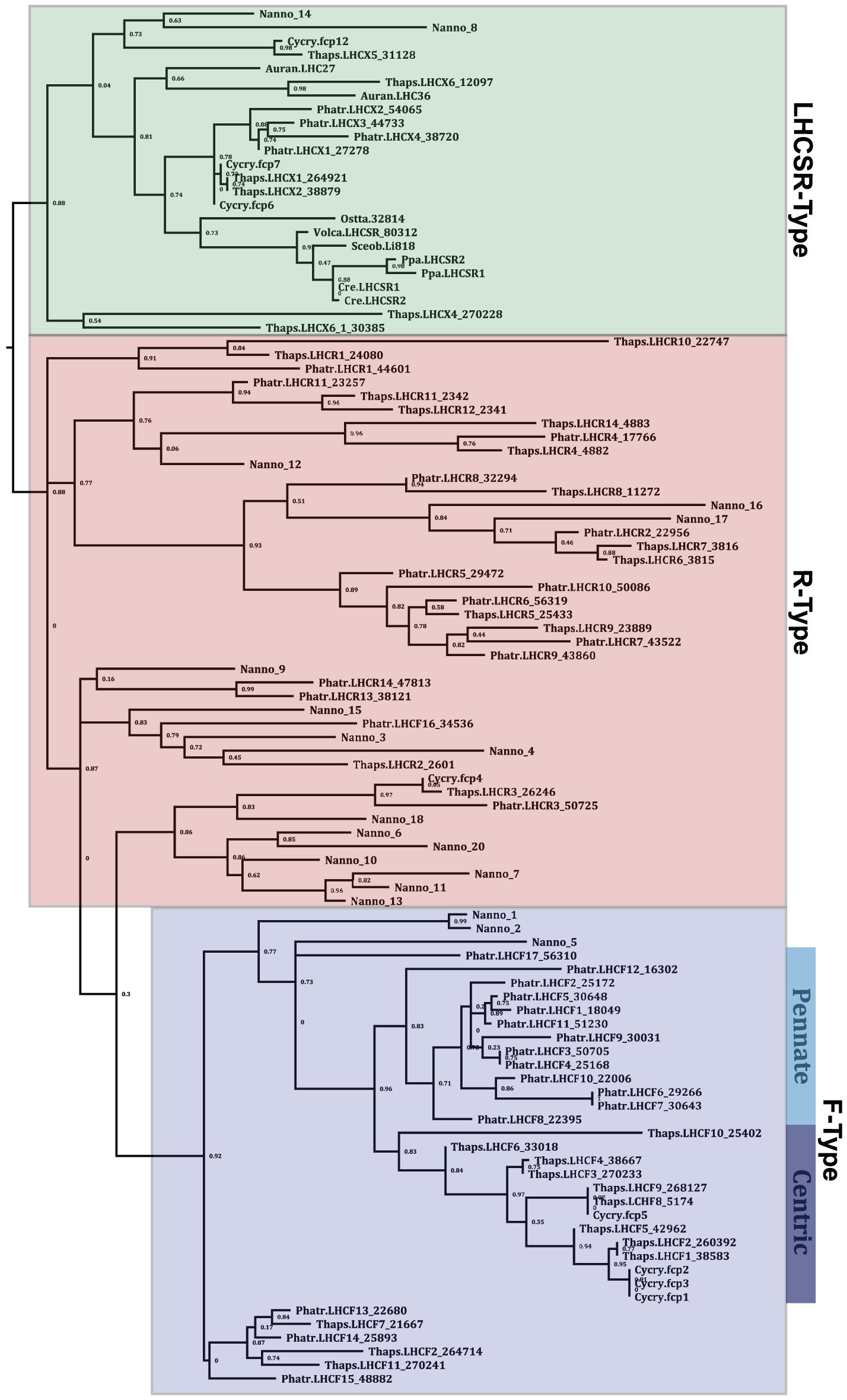 Maximum likelihood analysis of a MUSCLE alignment of 19 of the identified putative VCP protein sequences from <i>Nannochloropsis oceanica</i> CCMP1779 (Nanno) and the annotated LHC and LHCSR-like sequences from <i>Phaeodactylum tricornutum</i> (Phatr), <i>Cyclotella cryptica</i> (Cycry), <i>Thalassiosira pseudonana</i> (Thaps), <i>Aureococcus anophagefferens</i> (Auran), and the LHCSR-like sequences from <i>Chlamydomonas reinhardtii</i> (Cre), <i>Ostreococcus tauri</i> (Ossta), <i>Physcomitrella patens</i> (Ppa), <i>Scenedesmus obliquus</i> (Sceob), and <i>Volvox carteri</i> (Volca).