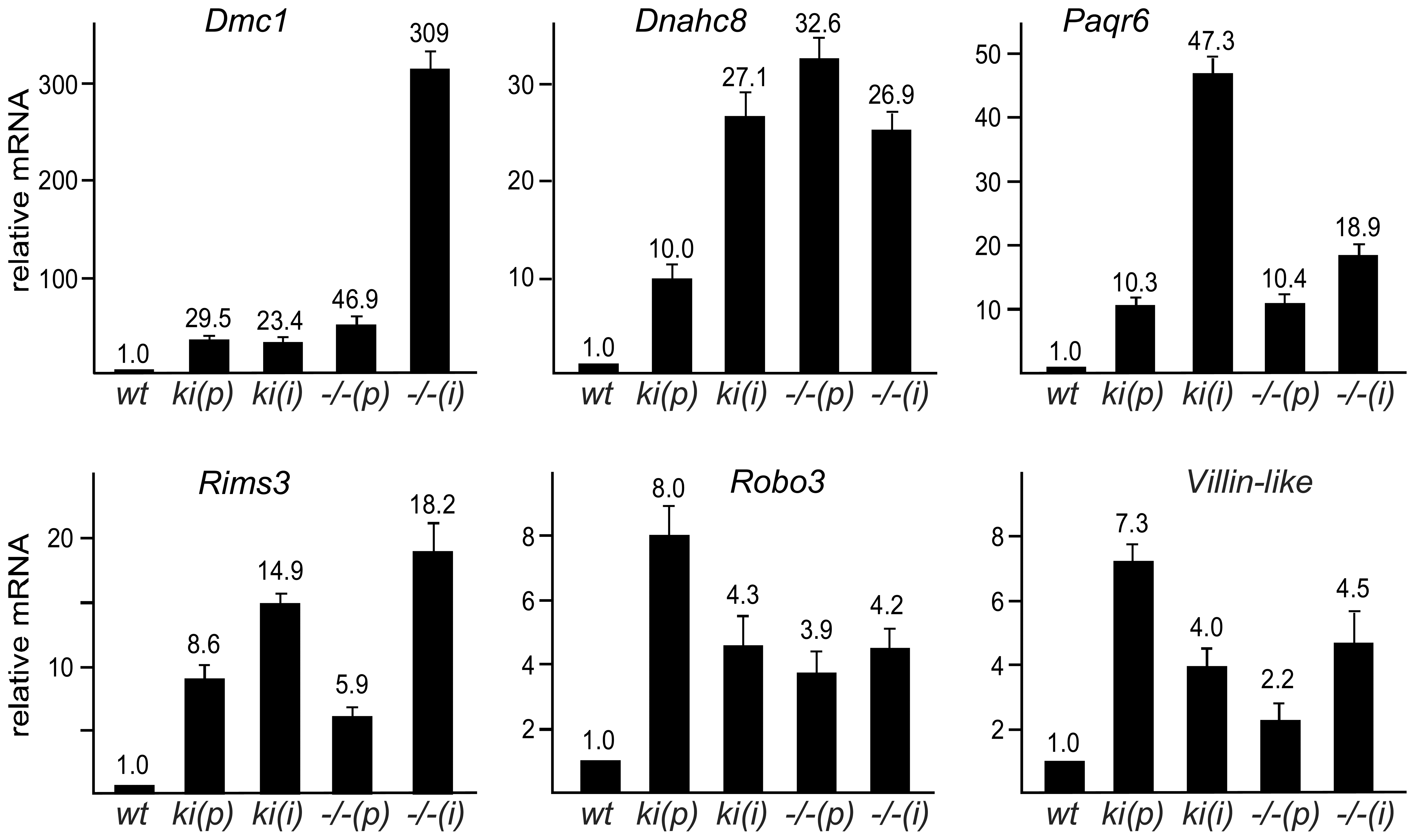 SUMOylation of Sp3 is required for silencing of spermatocyte-specific and neuronal genes in MEFs.