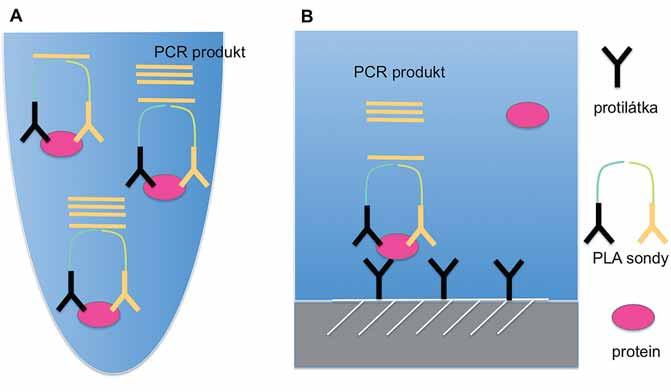 Schematické znázornění principu PLA technik v kapalné (A) a pevné (B) fázi.